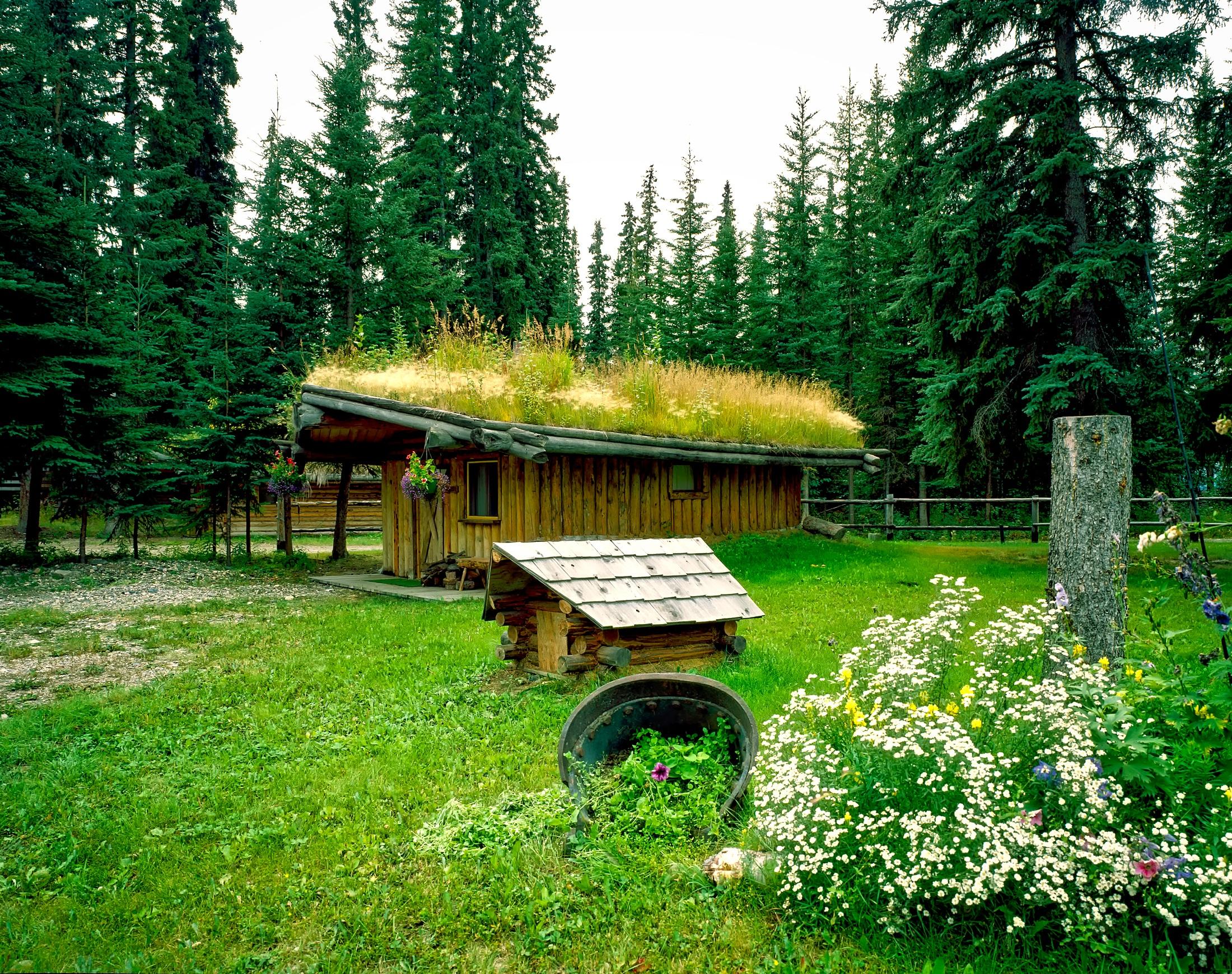 Fotos gratis paisaje naturaleza bosque desierto for Choza de jardin de madera techo plano