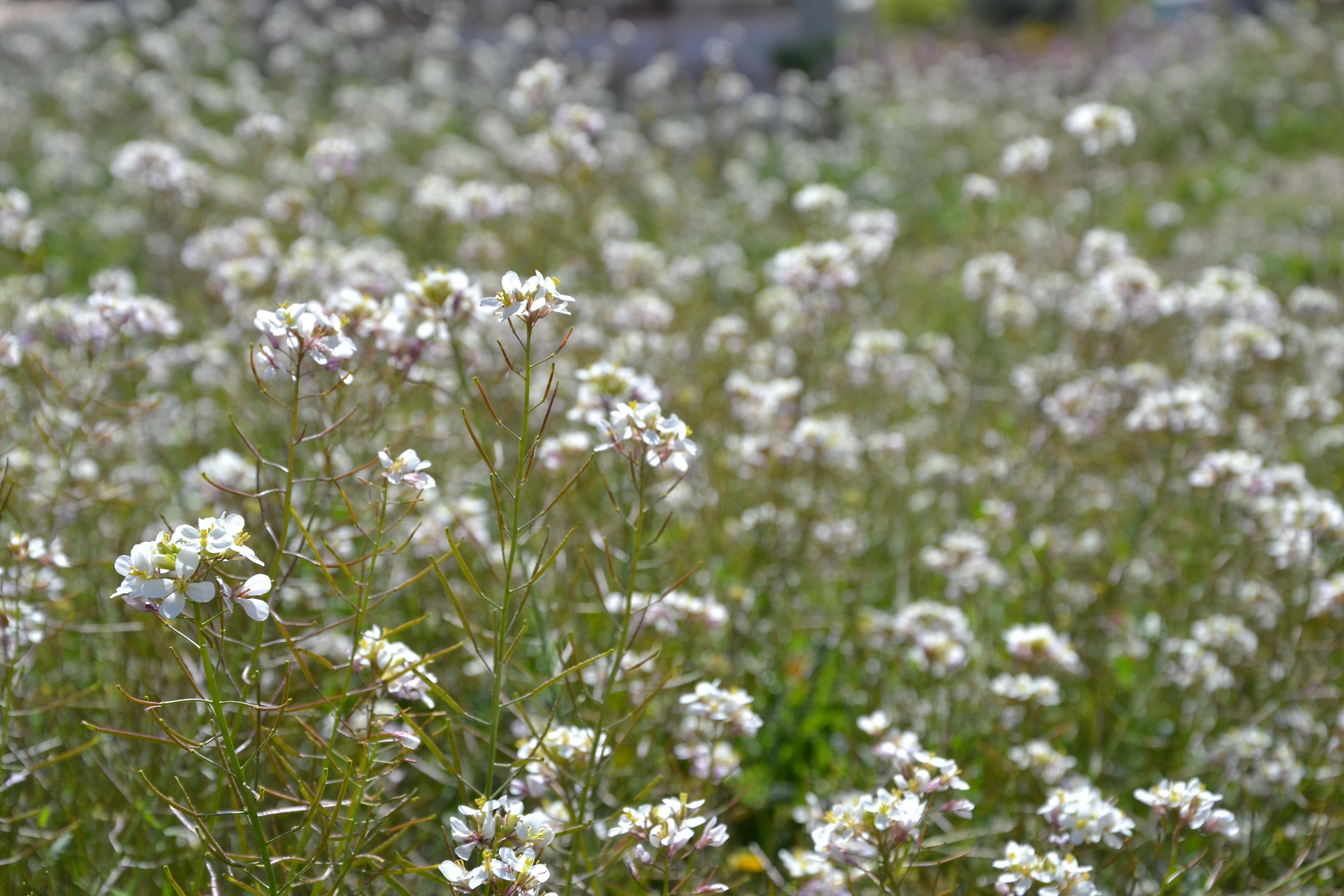 images gratuites paysage la nature herbe fleur champ. Black Bedroom Furniture Sets. Home Design Ideas