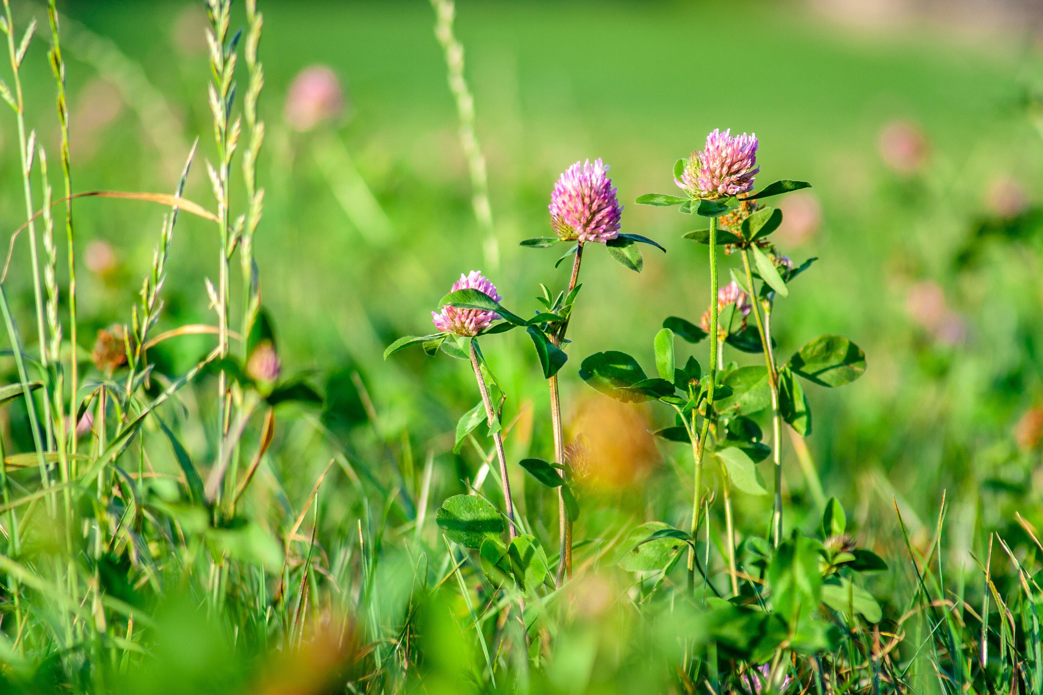 трава на лугу названия картинки являлся