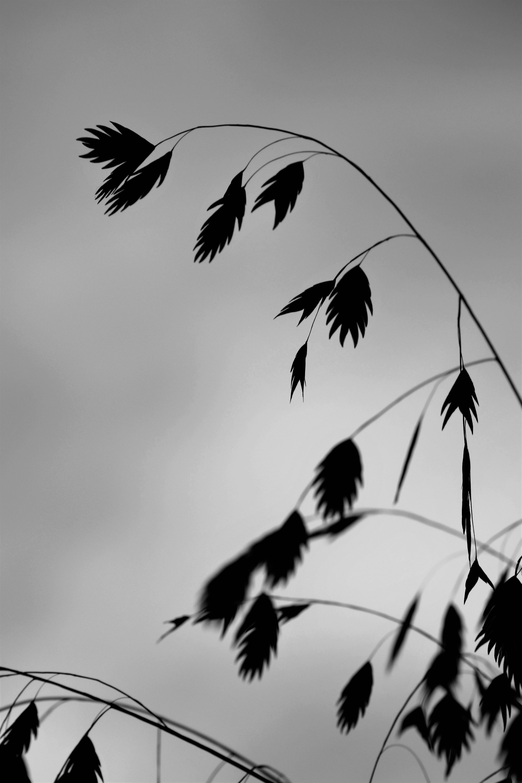 Gambar Pemandangan Alam Cabang Bayangan Hitam Burung Sayap