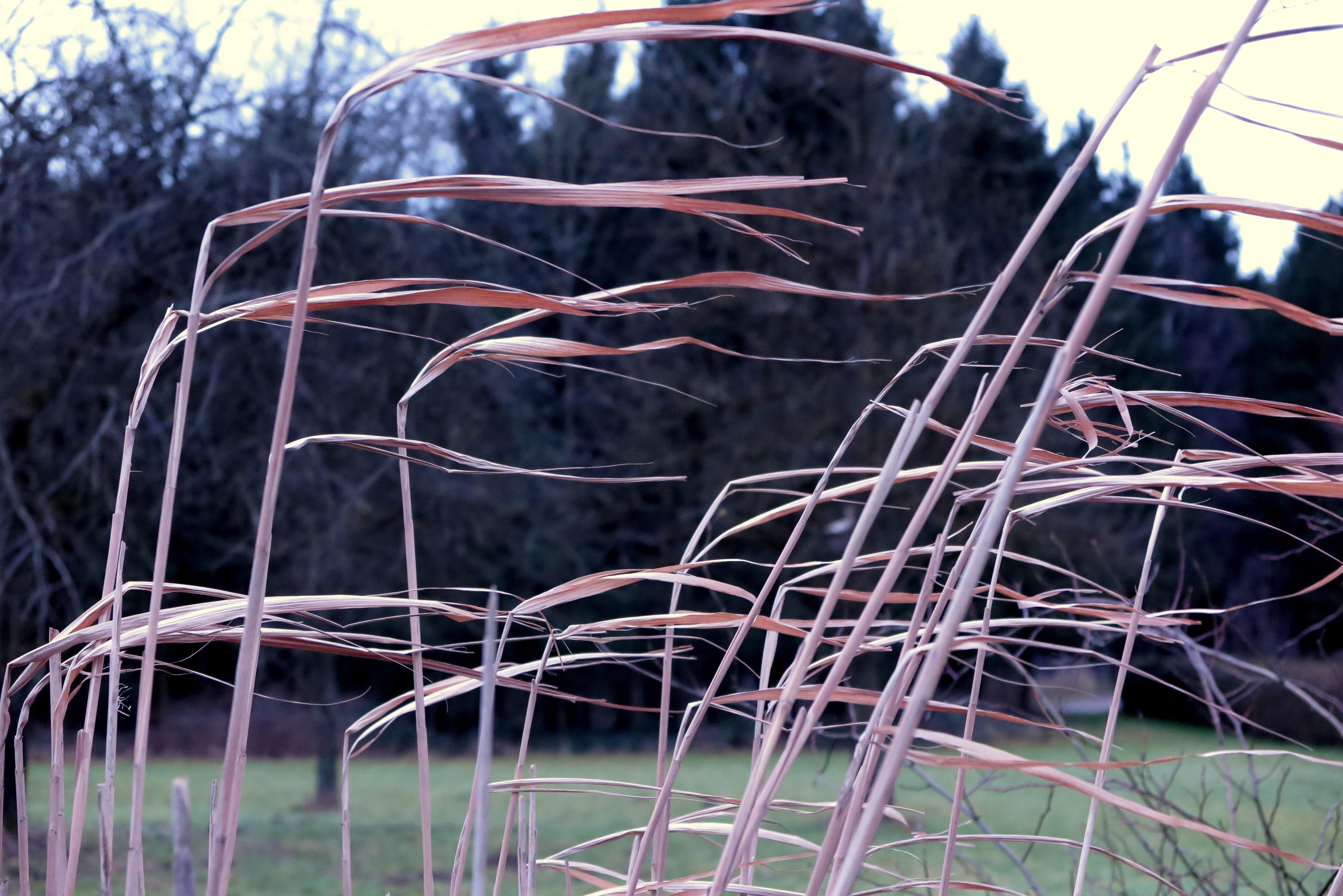 自然褐色_無料画像 : 風景, 自然, 草, フェンス, 工場, ホイール, リード ...
