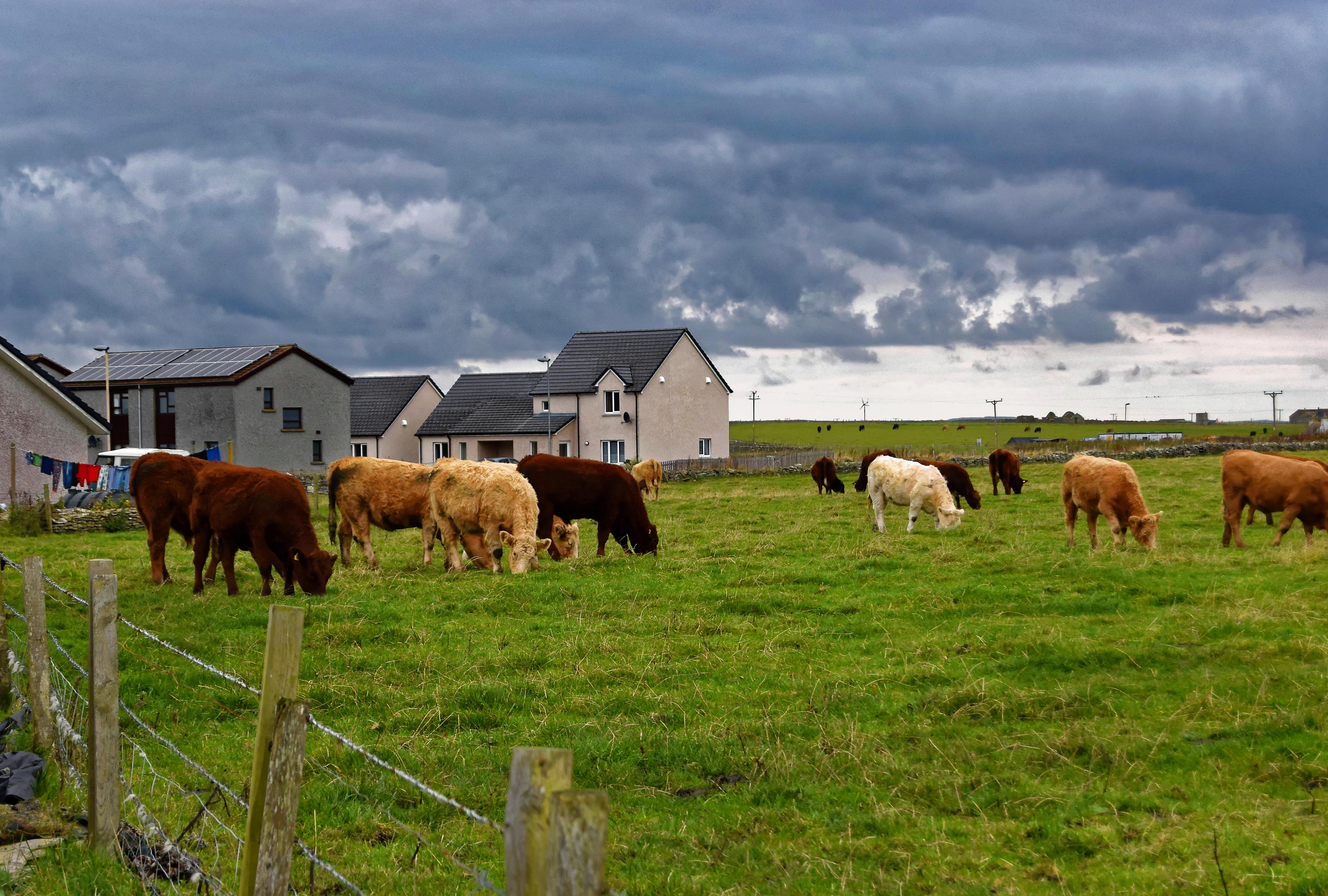 Купить участок для сельского хозяйства