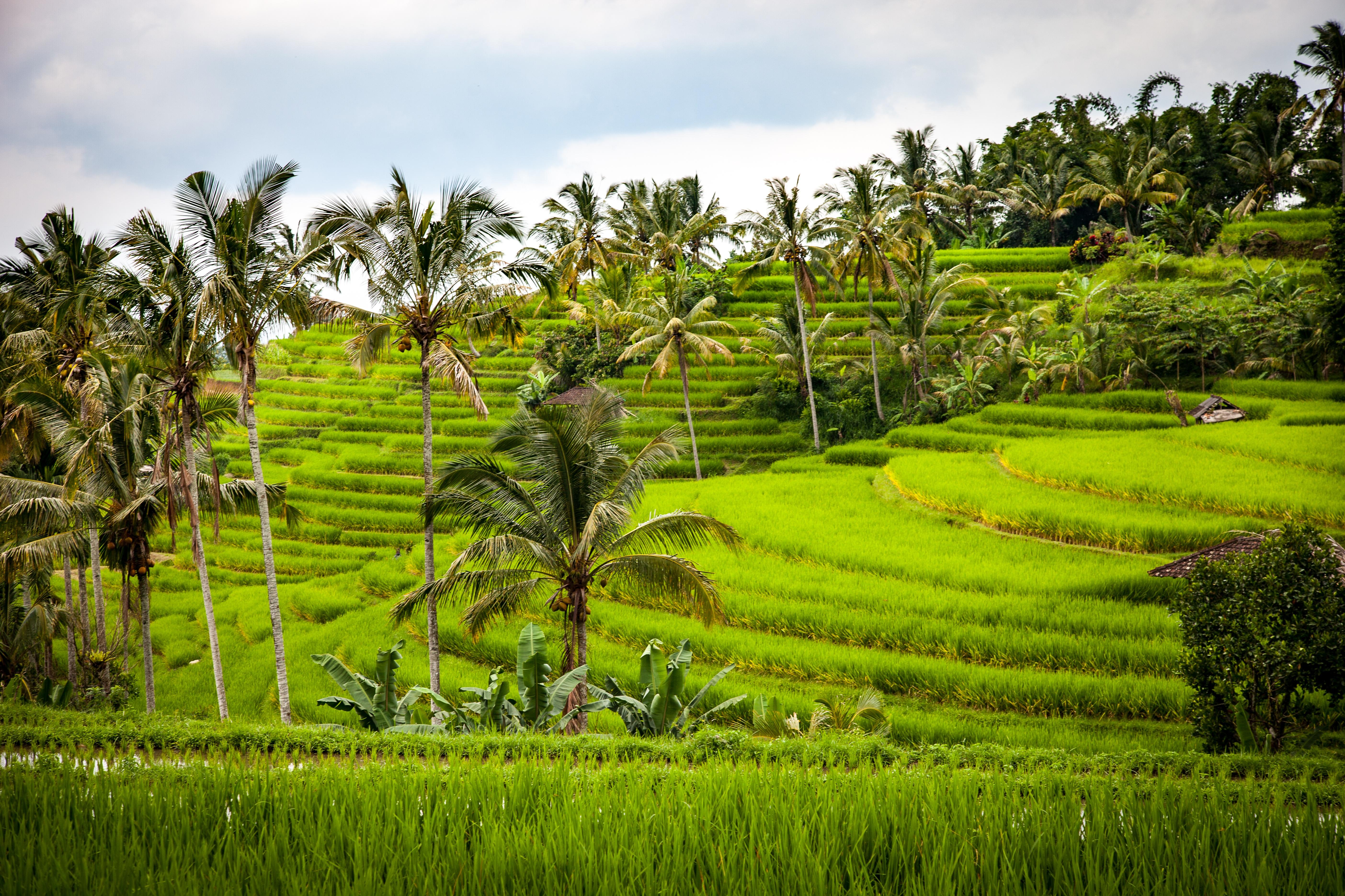 Immagini Belle : paesaggio, natura, erba, campo, prato, fiore, verde ...