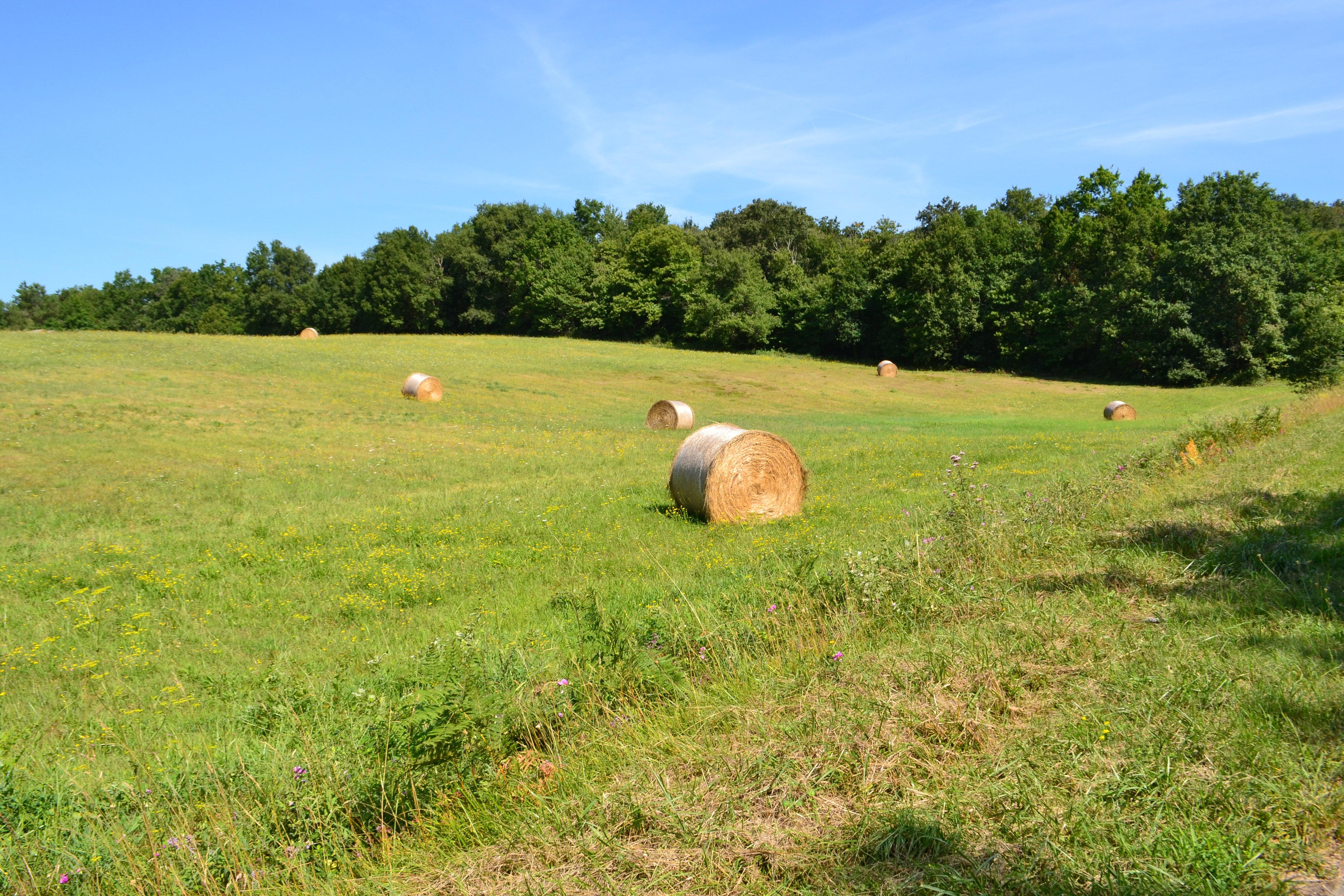Images Gratuites : paysage, la nature, herbe, foins, champ ...