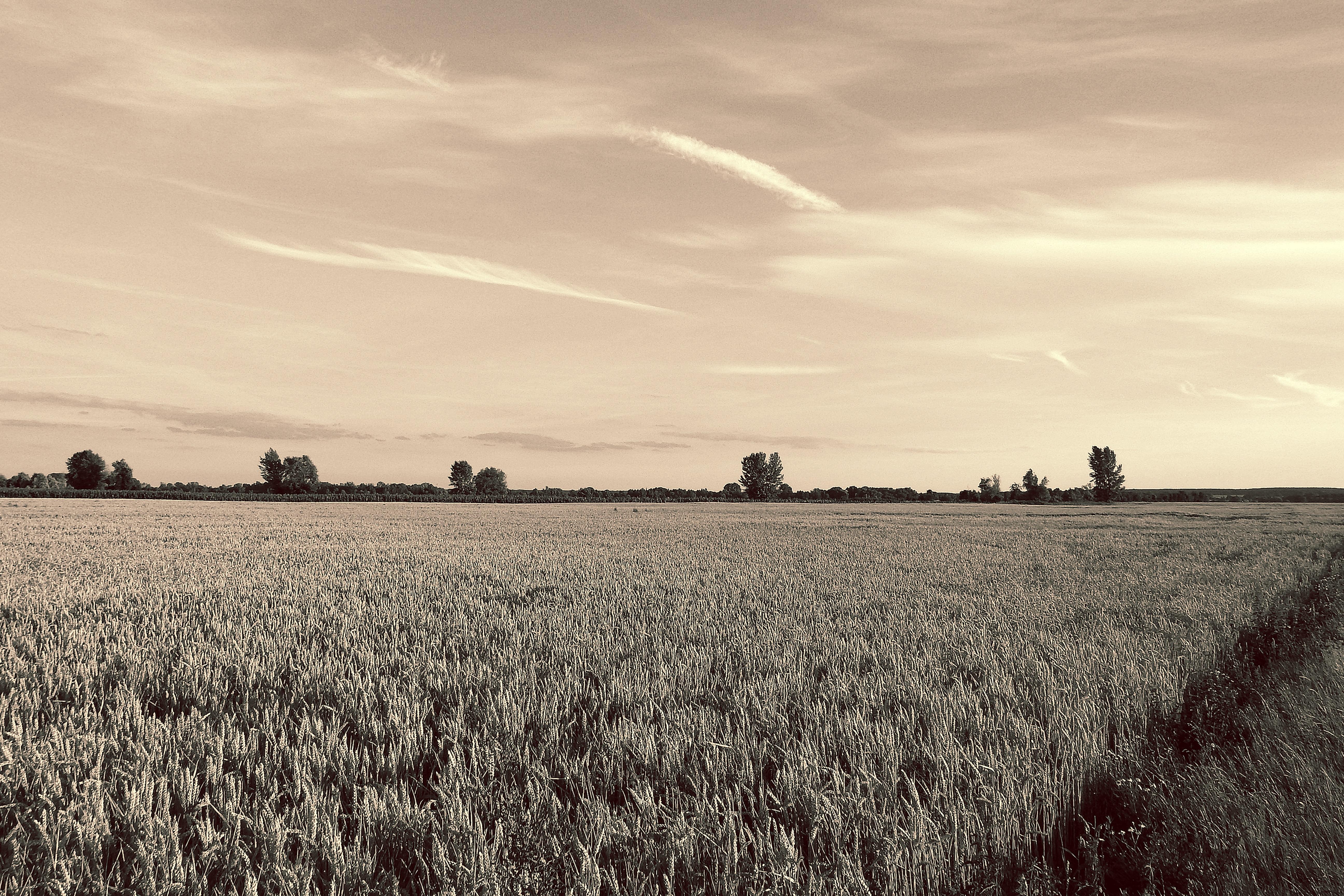 повышении равнины картинки черно-белые встречались фитоняшки