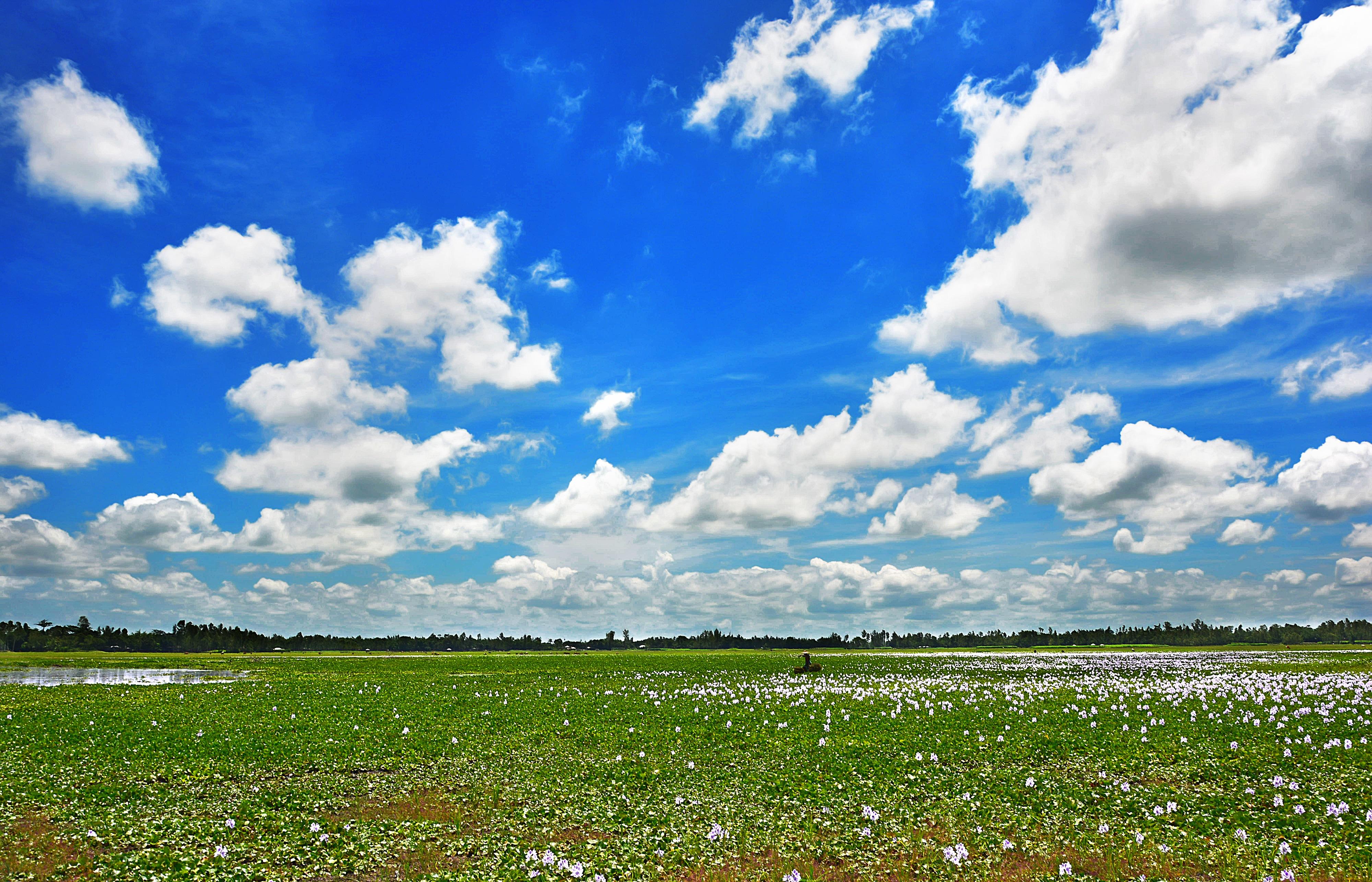 Gambar : pemandangan, alam, horison, langit, bidang ...