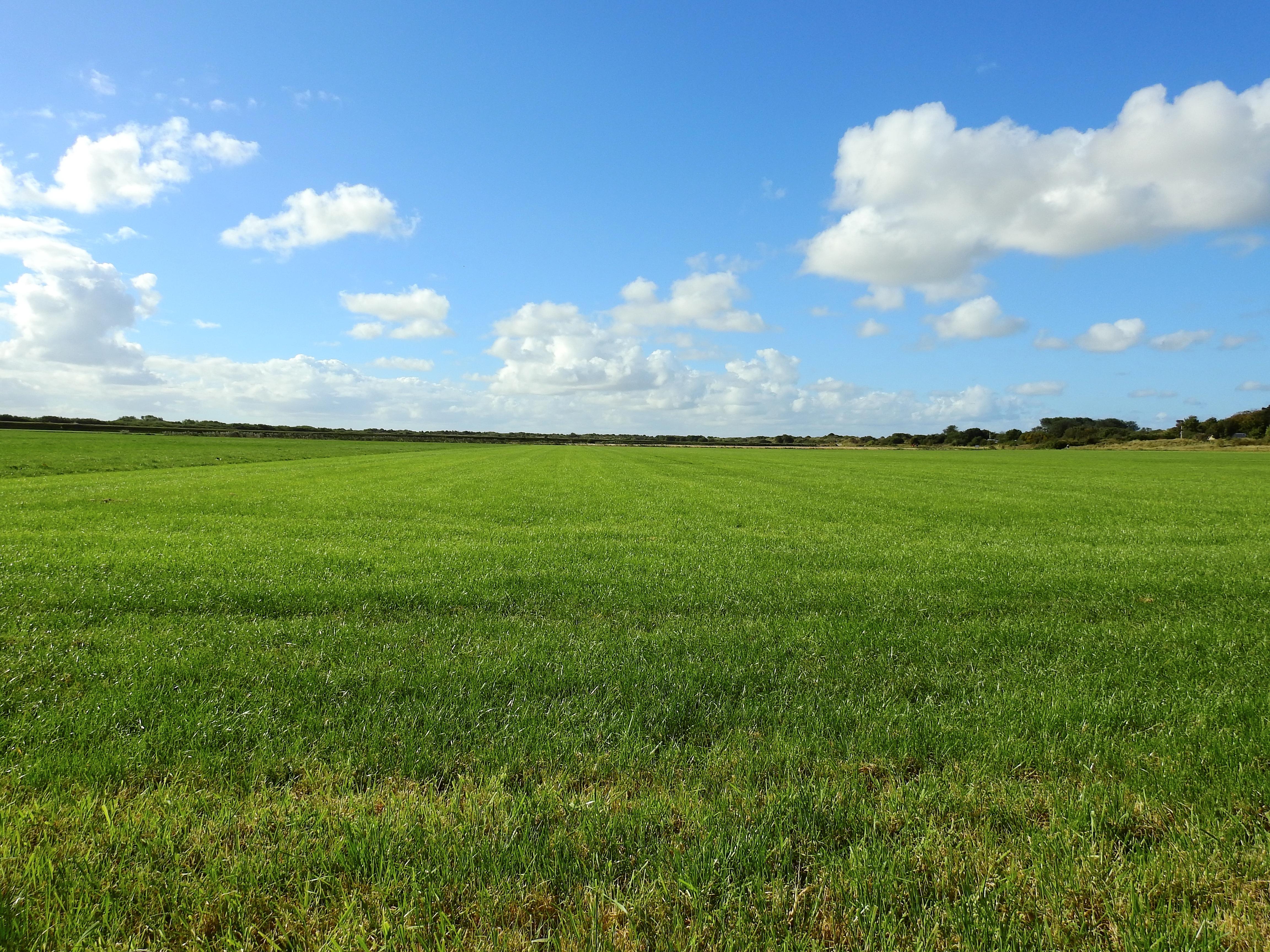 Картинки поле с горизонтом угол