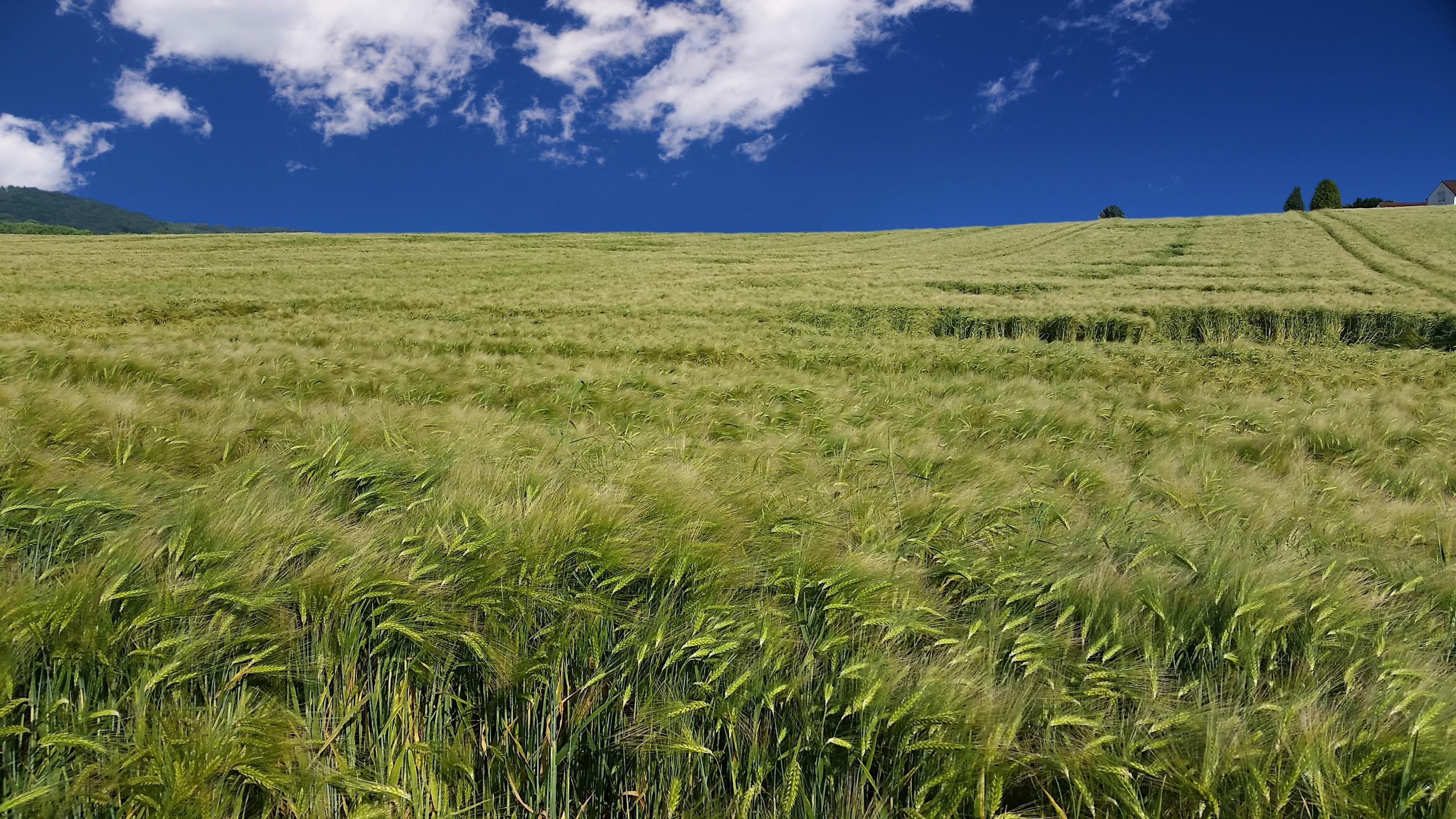 Free Images : Landscape, Nature, Horizon, Marsh, Sun, Lawn