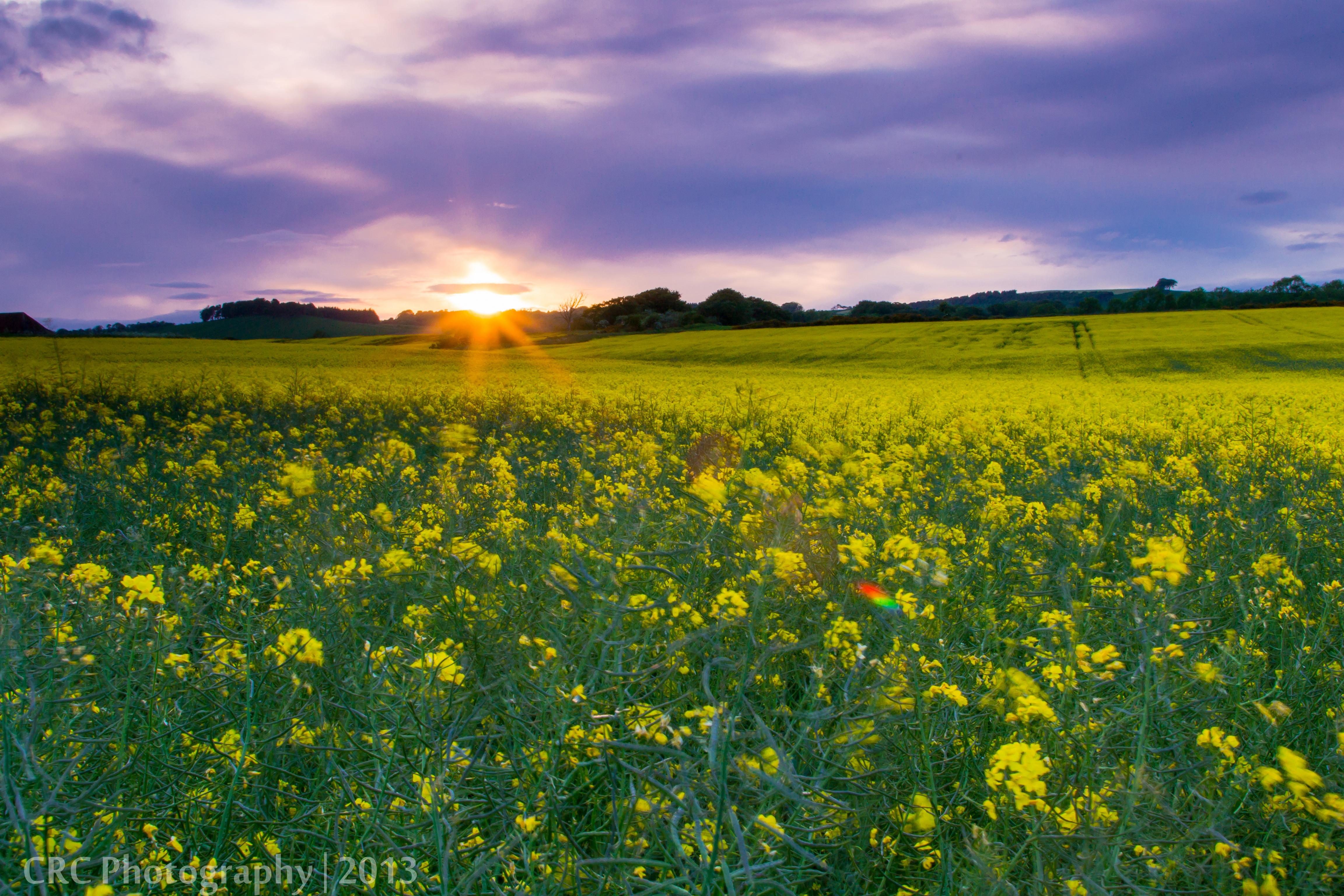 Free Images Landscape Nature Horizon Sky Sun Sunset Field