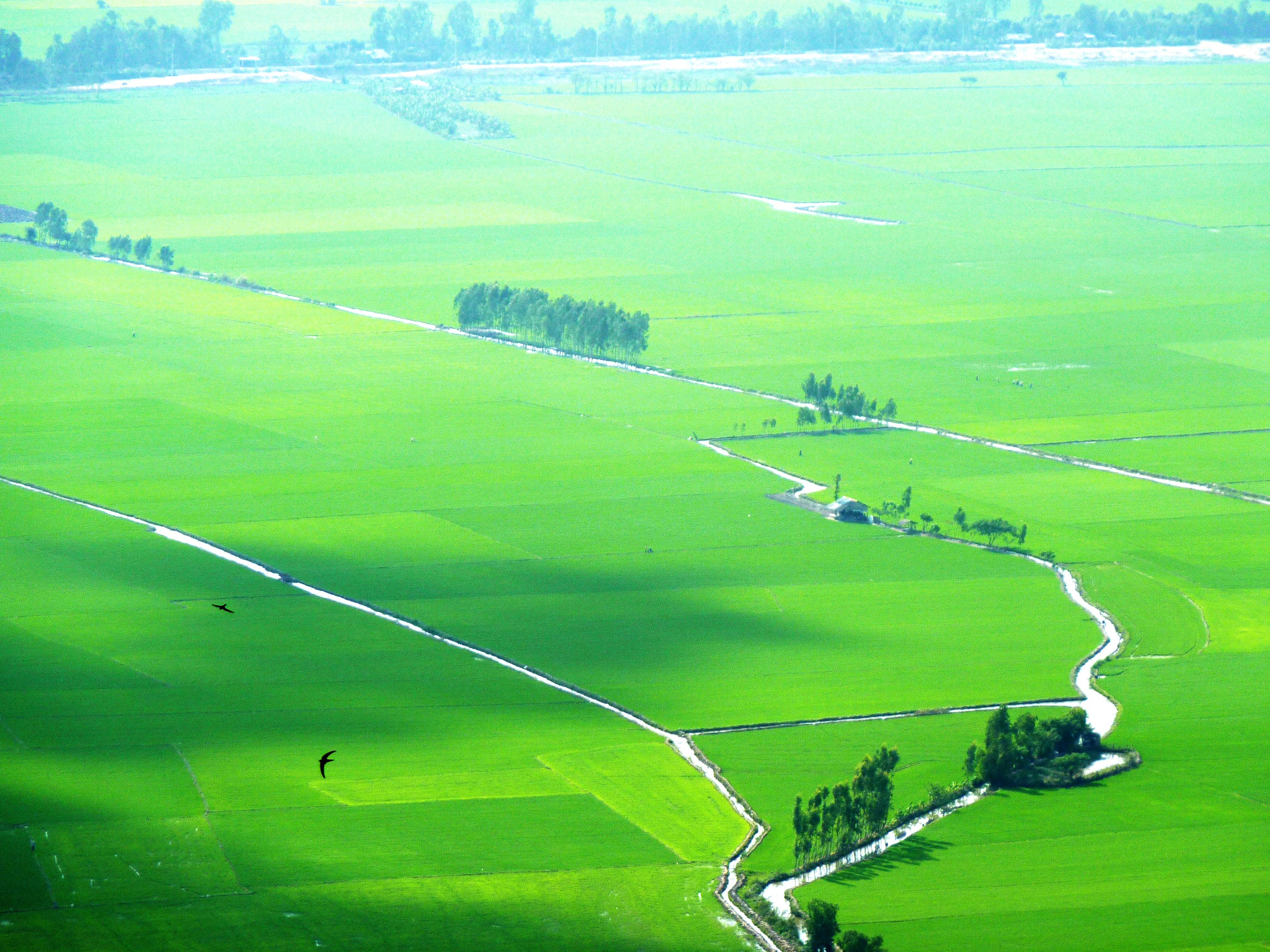 Gambar Pemandangan Alam Horison Struktur Bidang Padang Rumput
