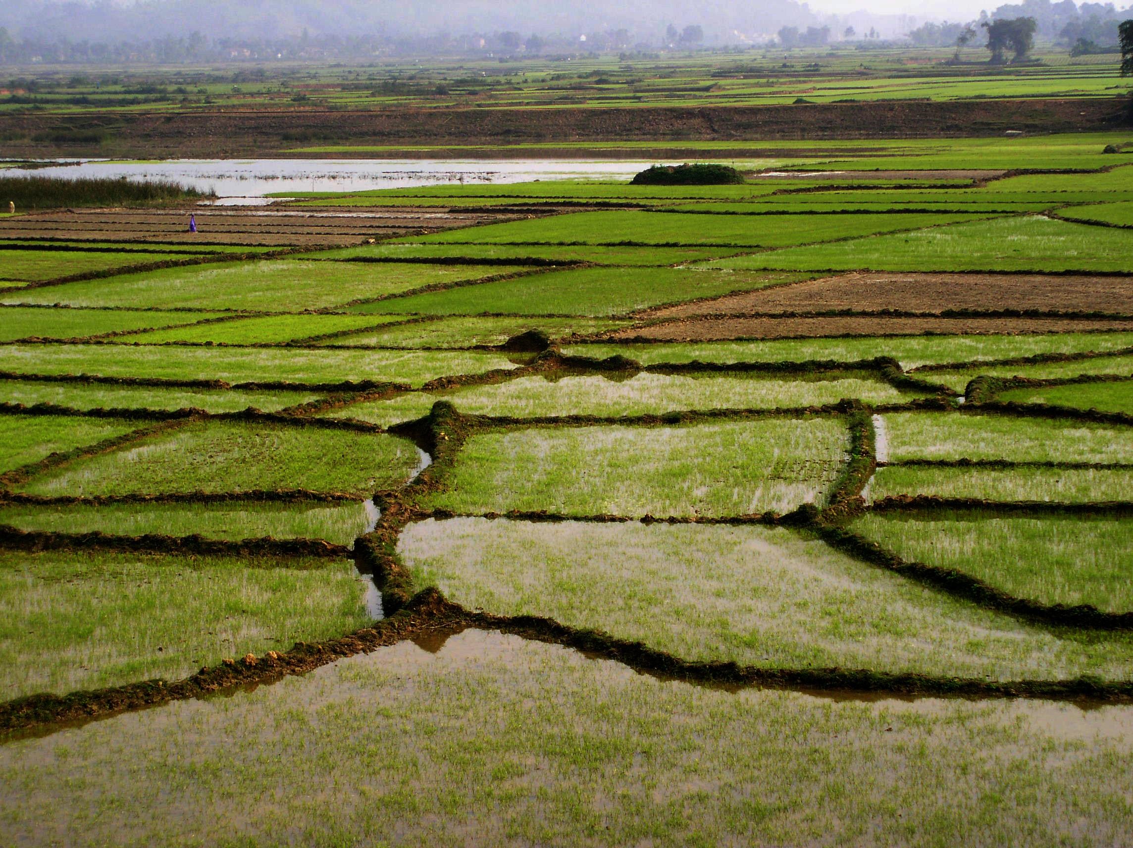 Fotos Gratis Paisaje Naturaleza Césped Pantano