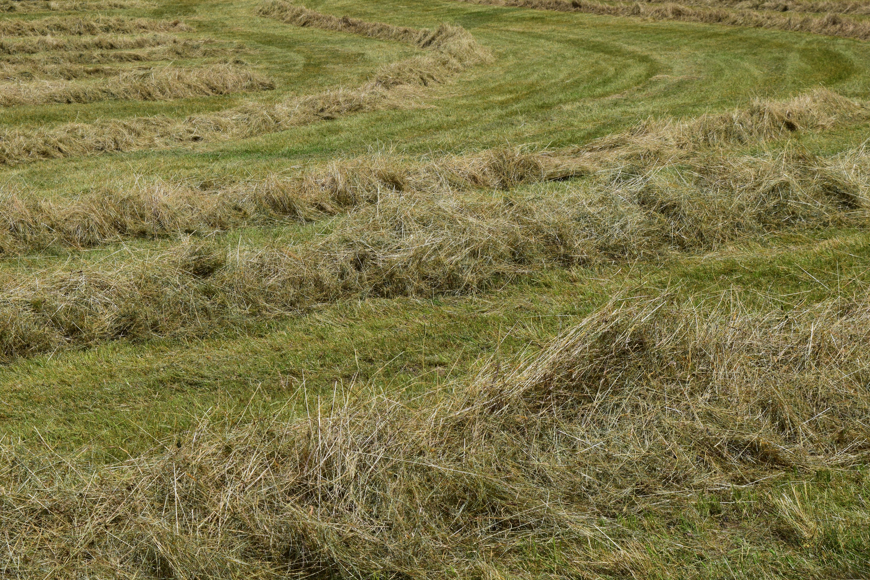 прошу трава скошена картинка глядеть как небу
