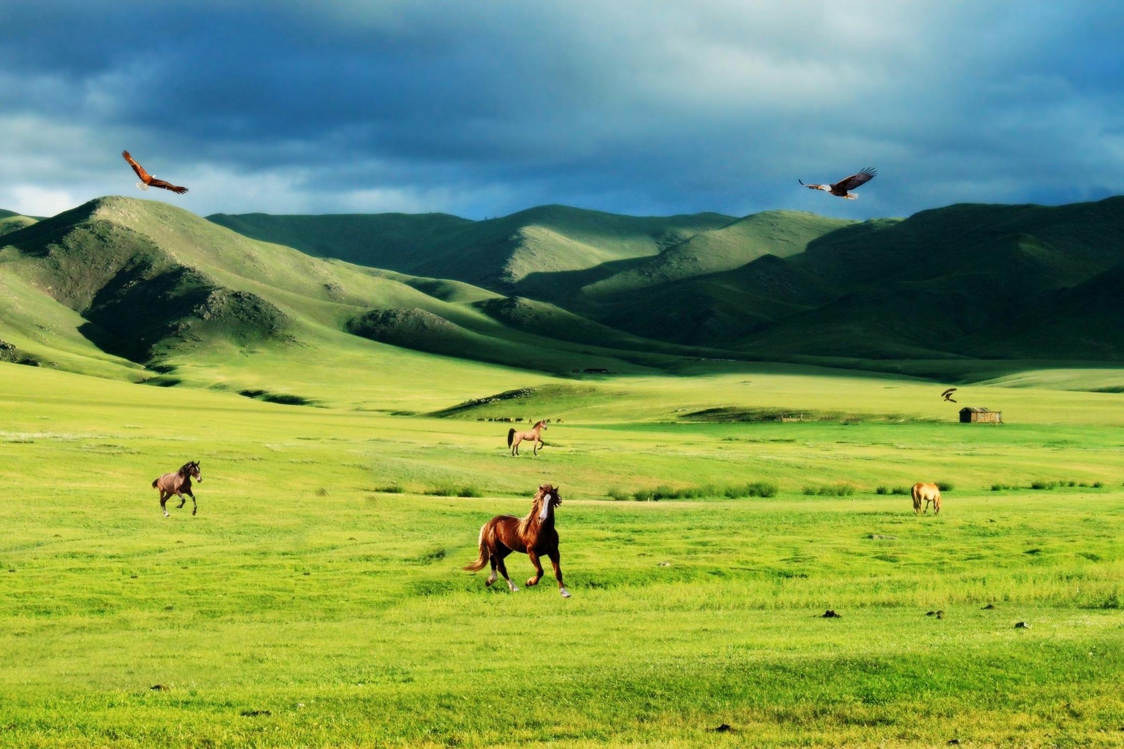 77 Koleksi Gambar Pemandangan Alam Hewan Dan Tumbuhan HD Terbaik