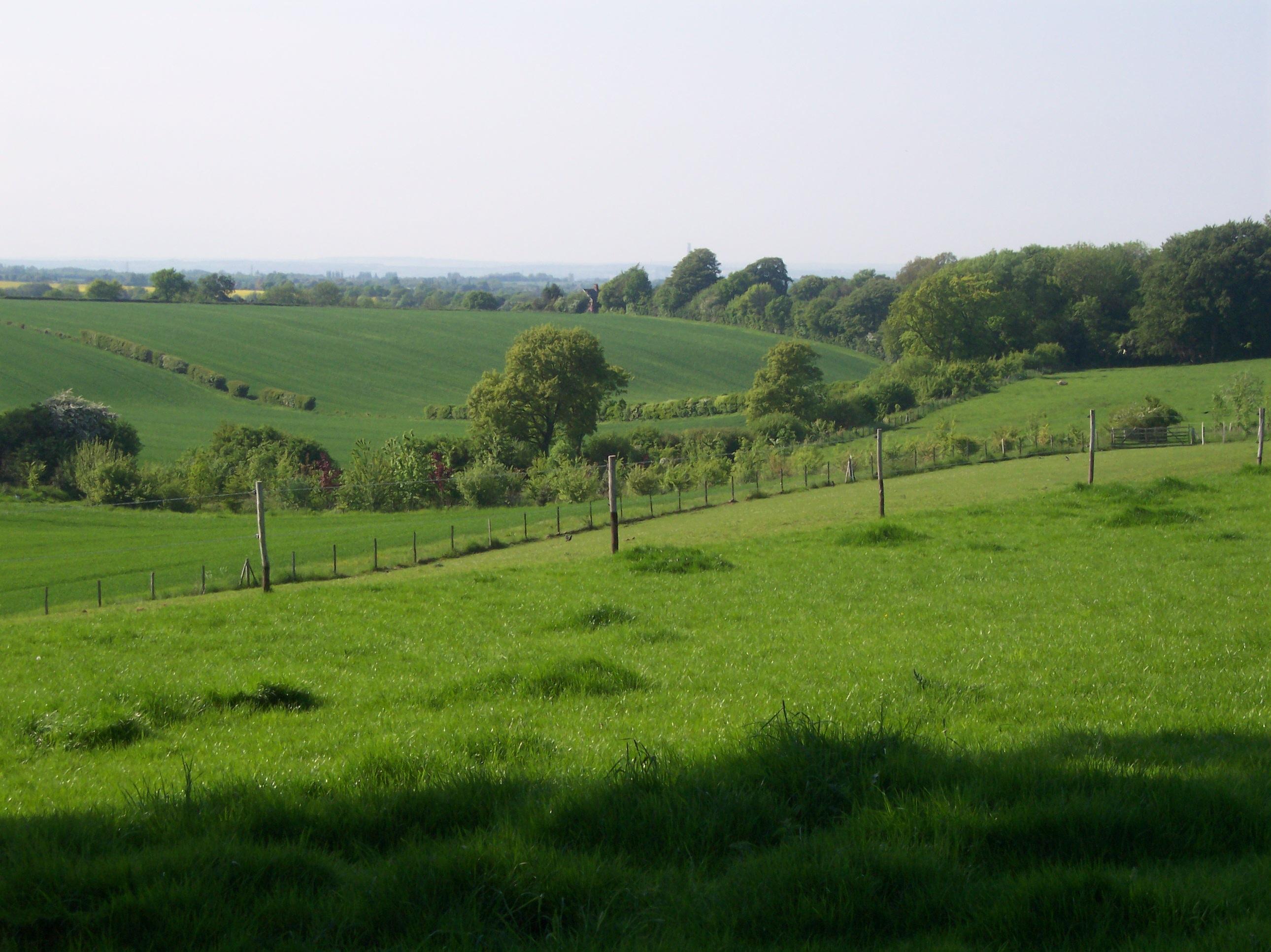 Gambar Pemandangan Alam Outdoor Kayu Bidang Tanah Pertanian