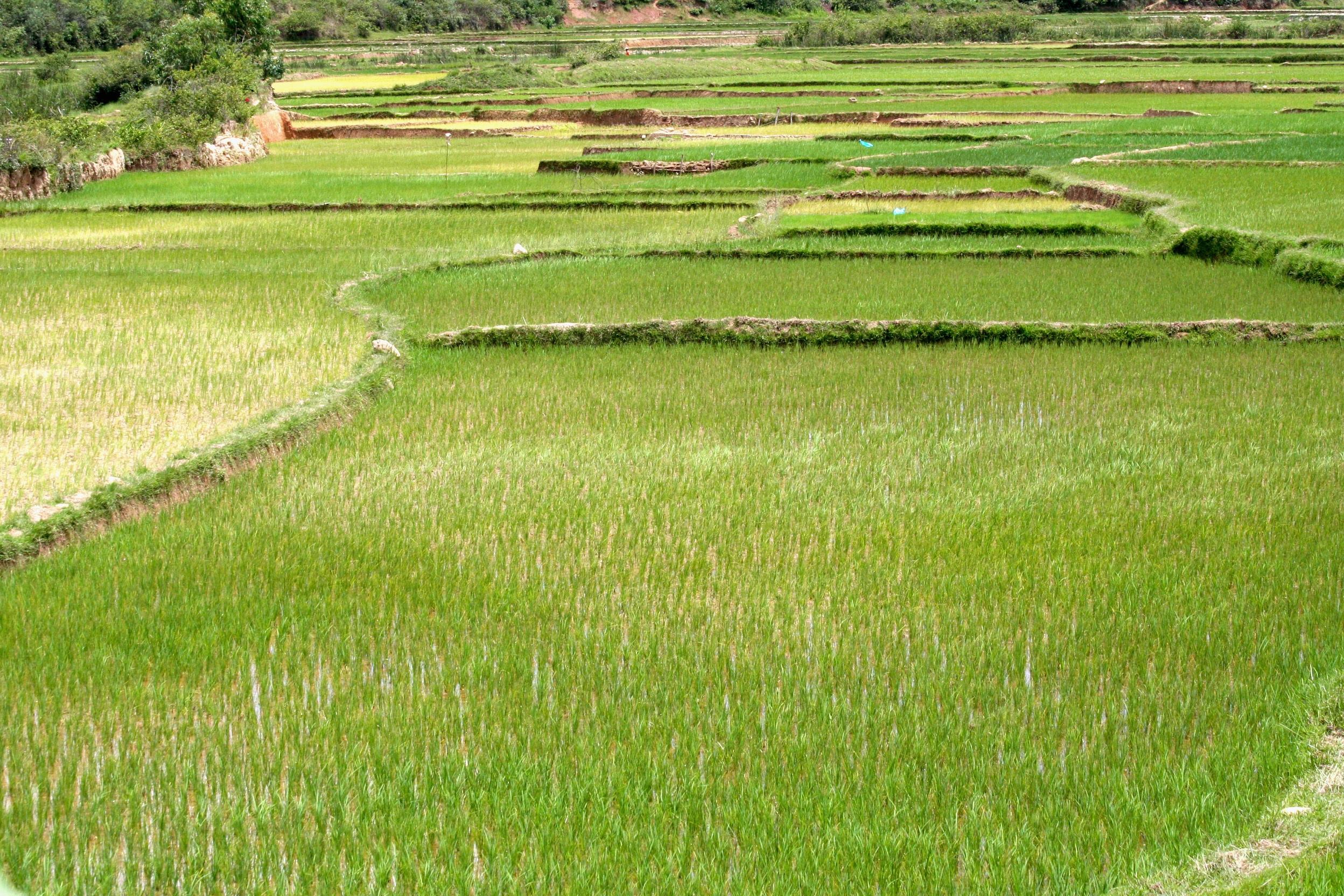 Gambar Pemandangan Alam Menanam Bidang Tanah Halaman Rumput
