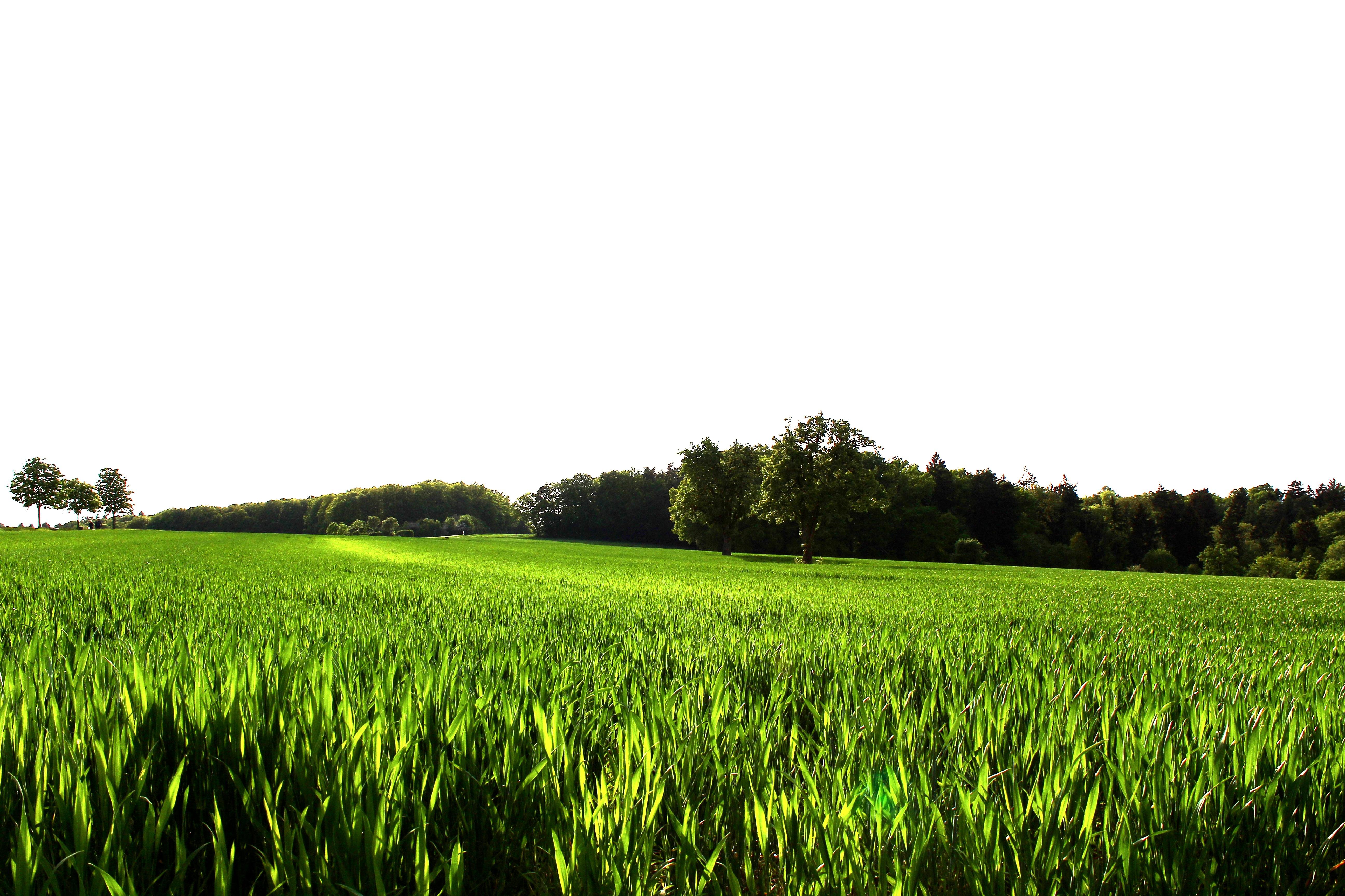 Картинки с зеленым лугом