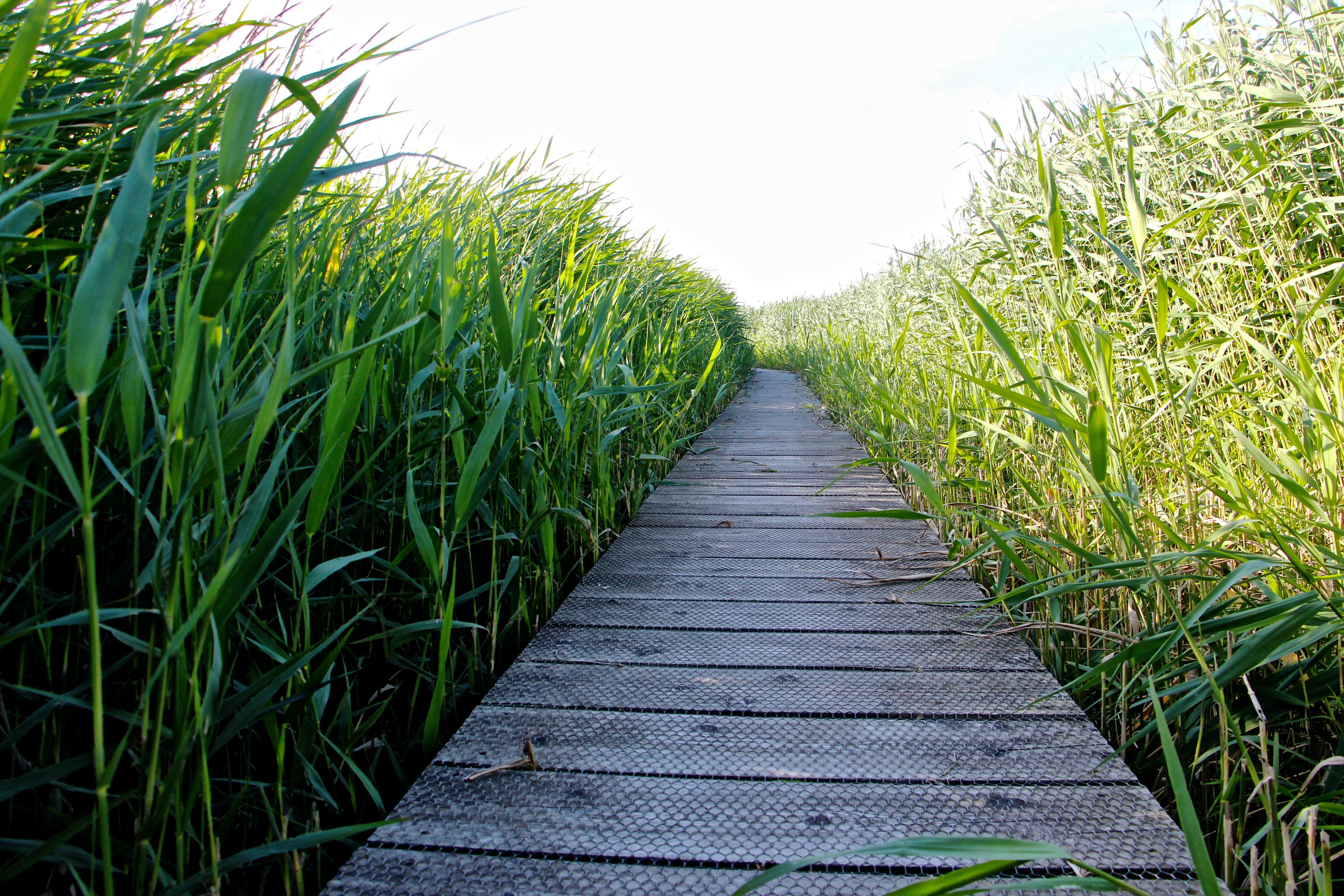 Kostenlose Foto Landschaft Natur Pflanze Feld Rasen Wiese