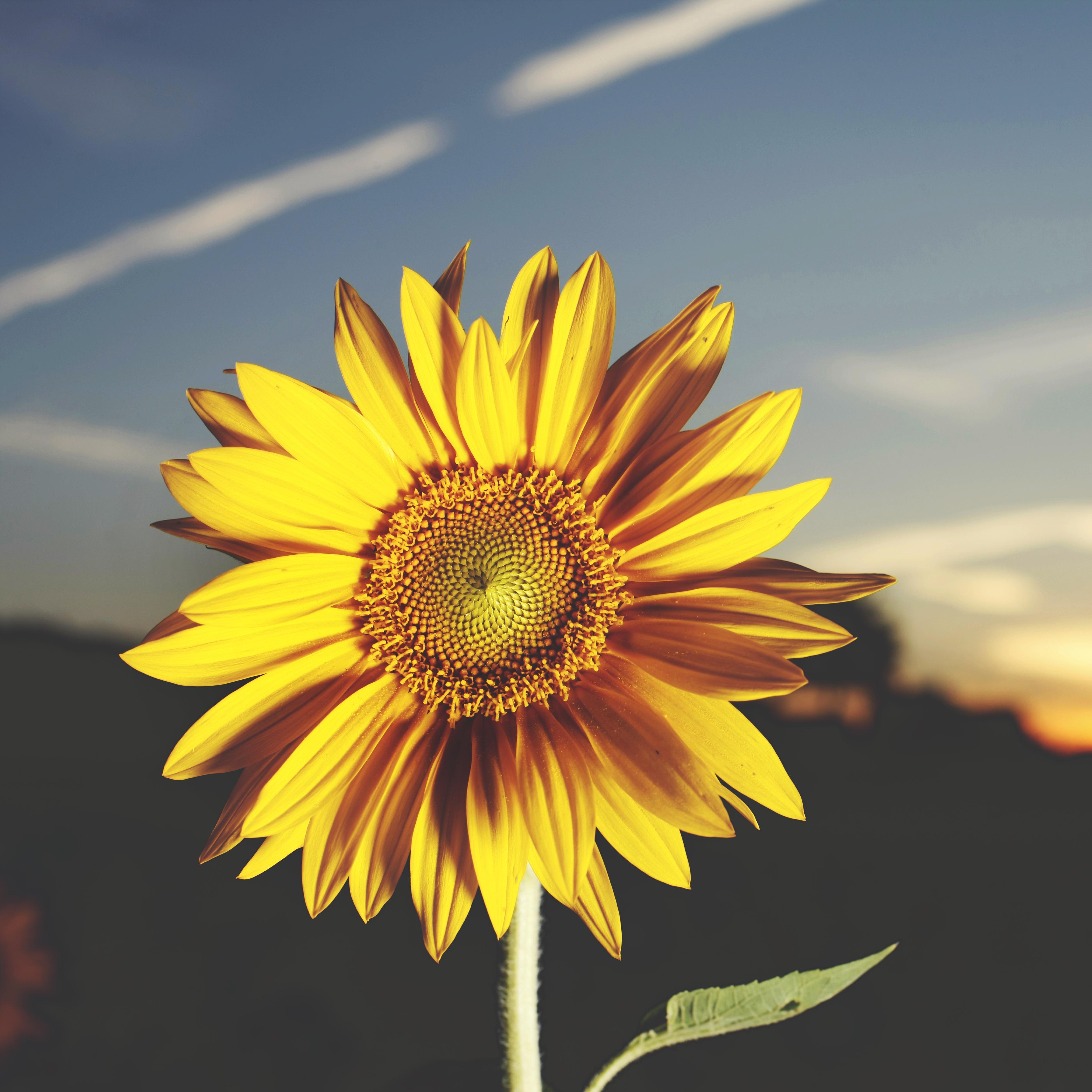 Download 740 Koleksi Gambar Bunga-bunga Yang Bagus Gratis