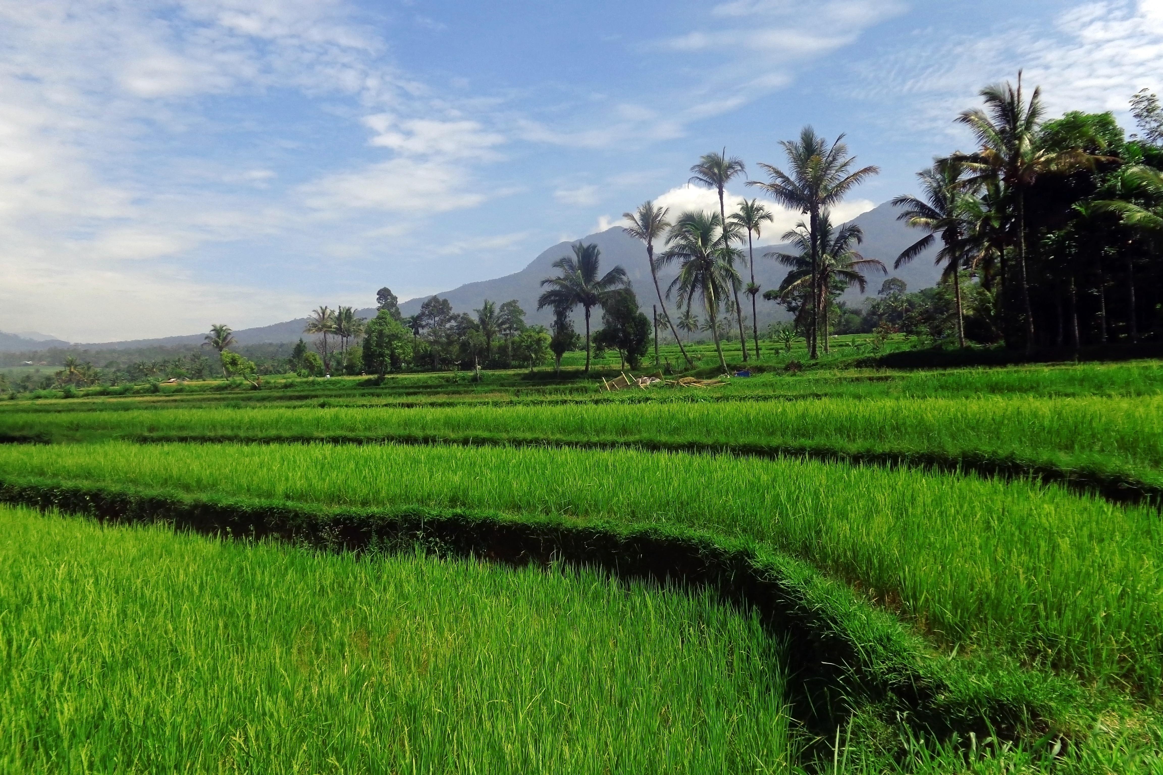 Gambar Pemandangan Alam Langit Bidang Tanah Pertanian Halaman