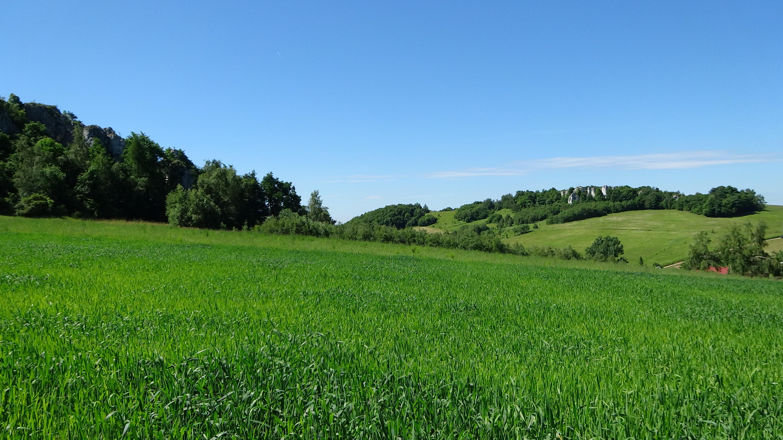 зеленый лес зеленое поле картинки днем рождения