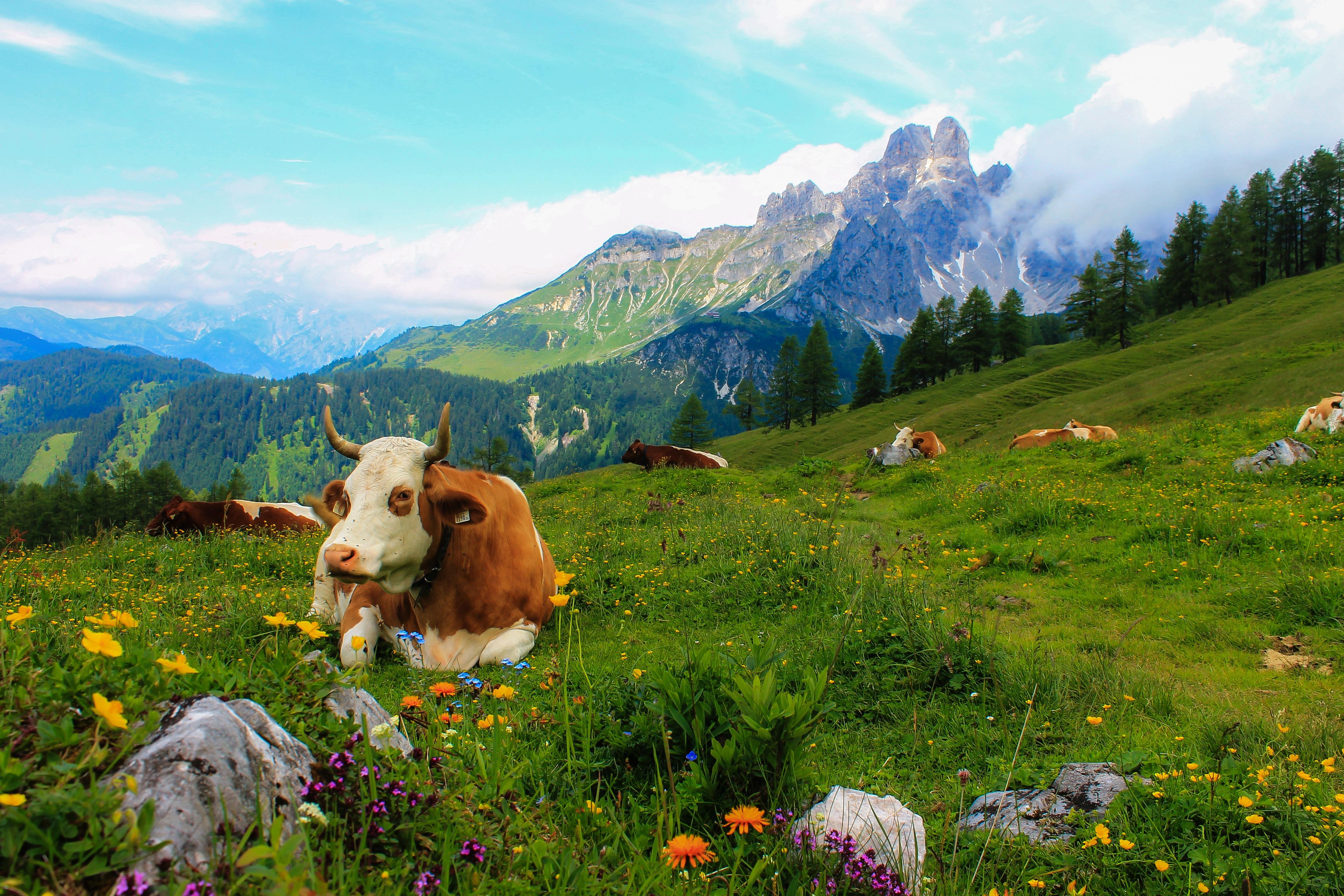 Paisajes De Animales: Images Gratuites : Paysage, La Nature, Herbe, Région