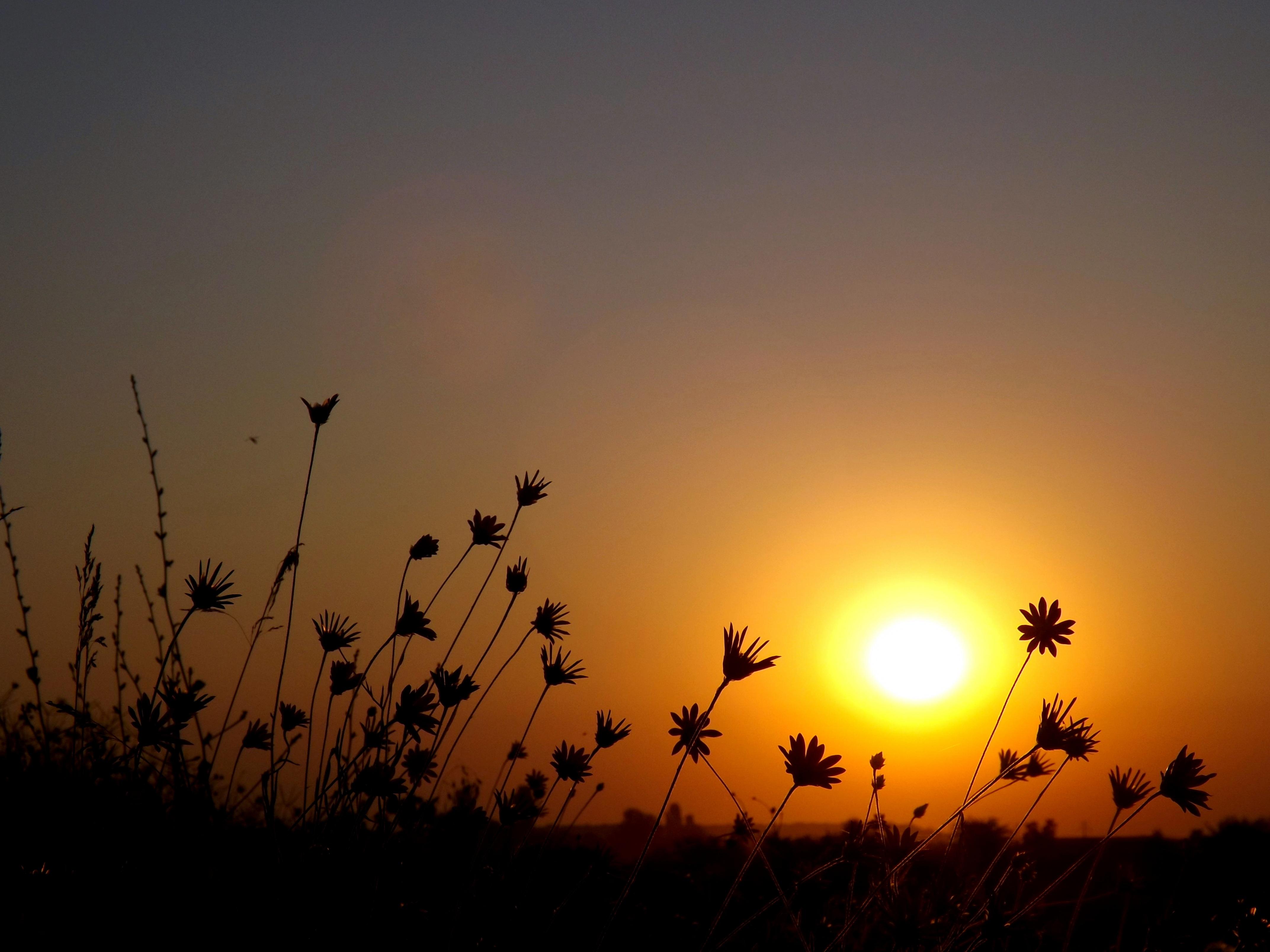images gratuites paysage la nature horizon nuage ciel soleil lever du soleil le coucher. Black Bedroom Furniture Sets. Home Design Ideas
