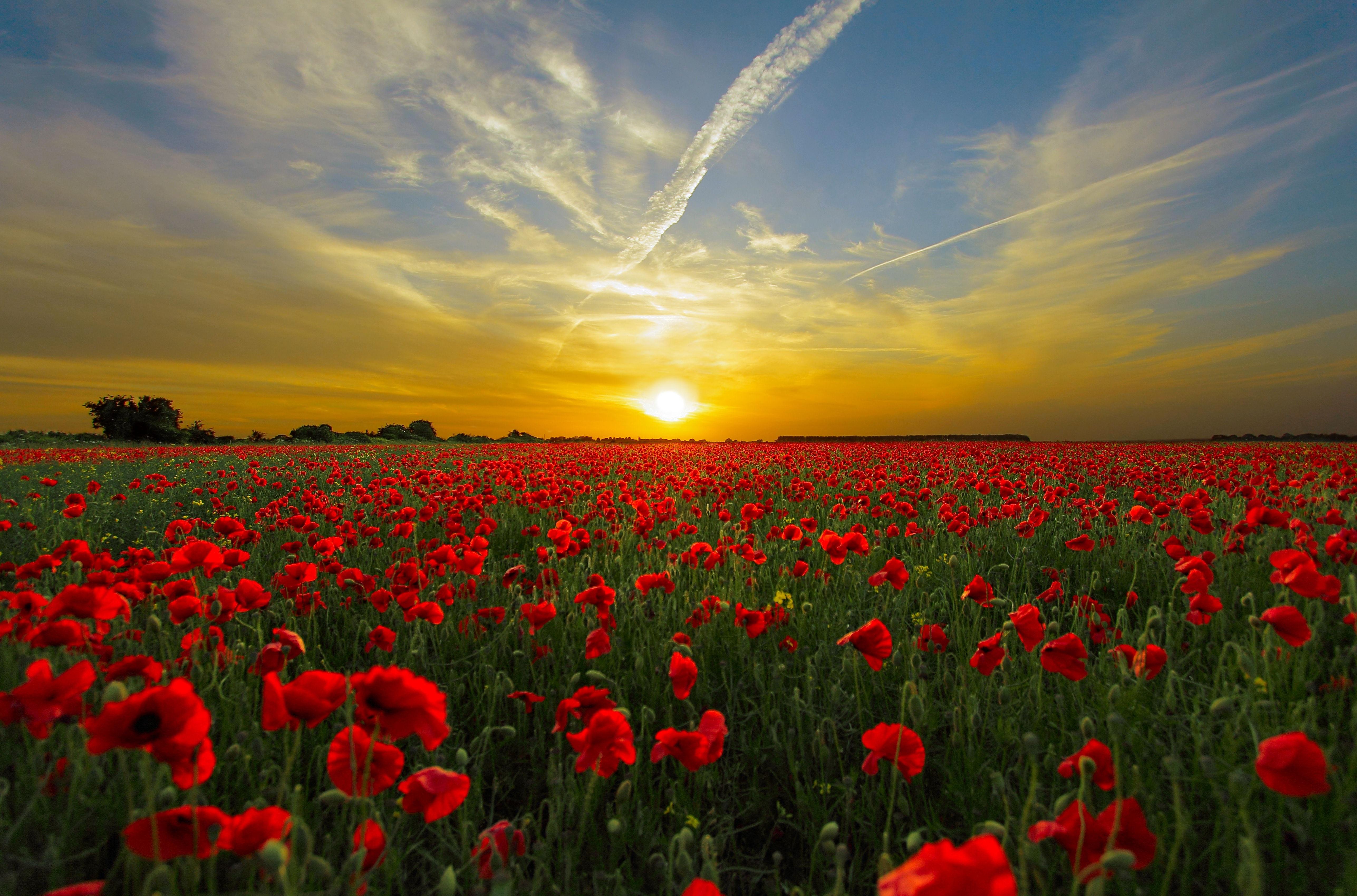 Landscape Nature Horizon Plant Sky Sun Sunrise Sunset Field Meadow Prairie Flower Red Plain Wildflower Clouds