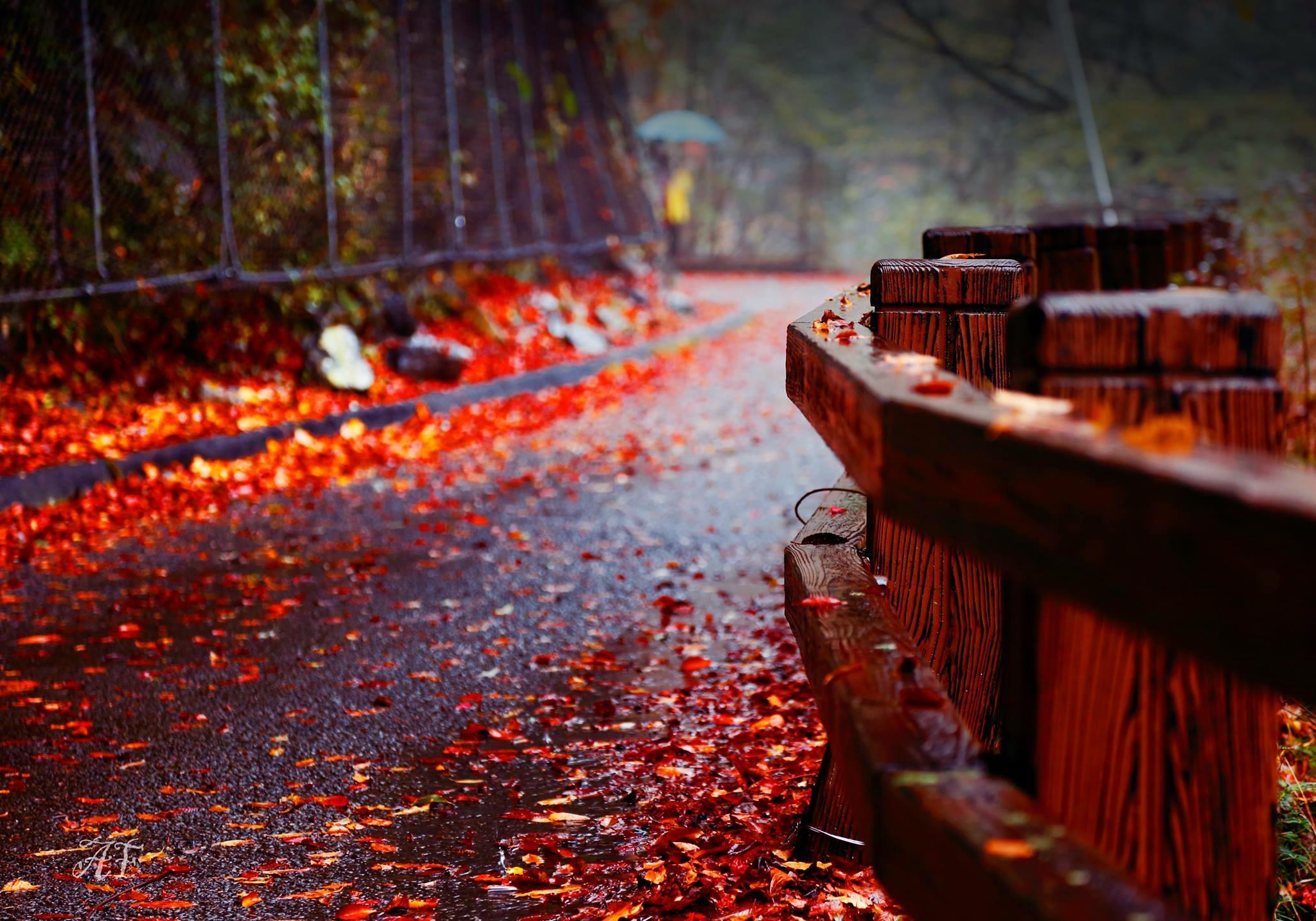 Gambar : pemandangan, alam, horizone, gunung, Jepang, kyoto