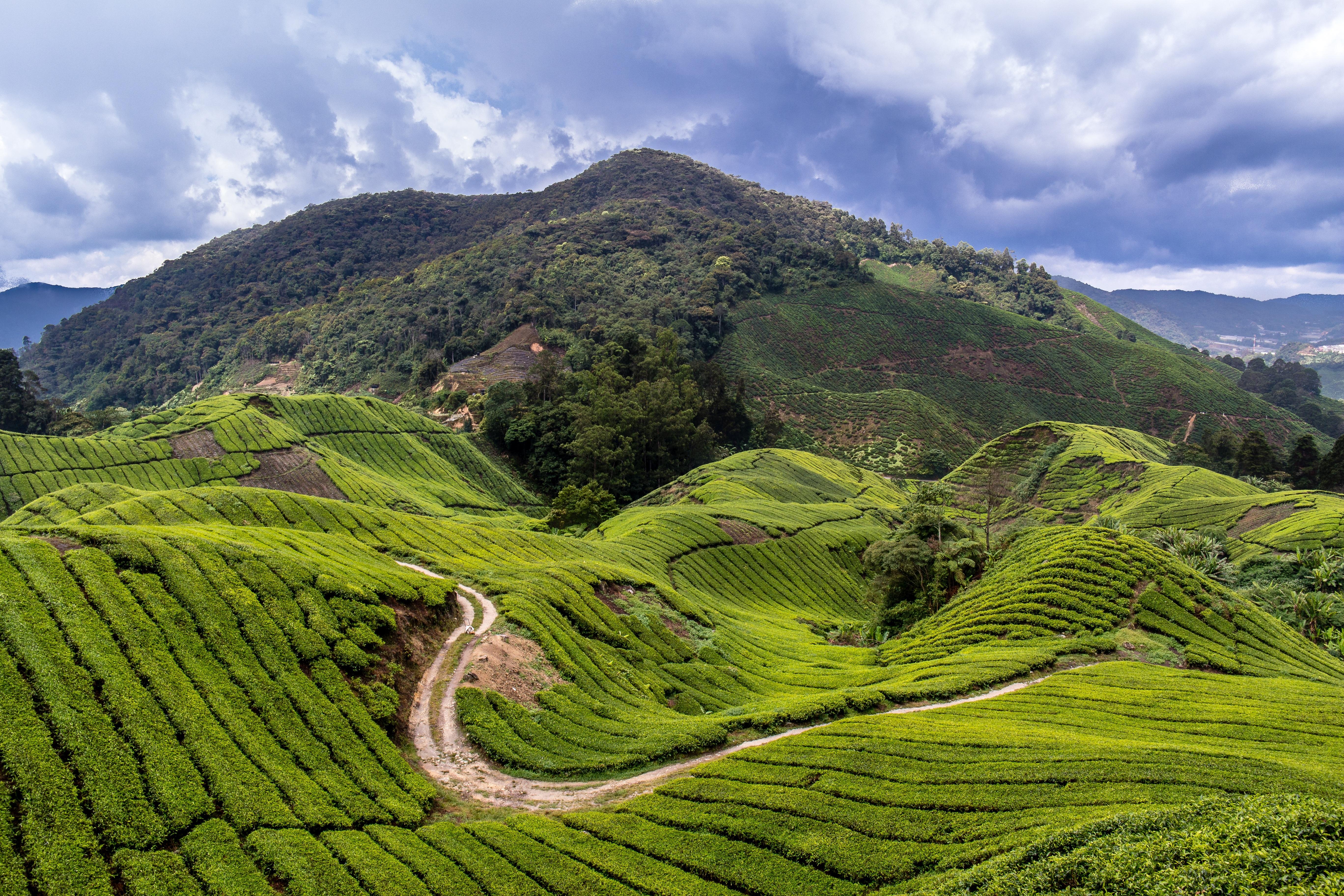 gambar pemandangan gunung bukit lembah pegunungan perjalanan hijau pertanian dataran tinggi teras padang rumput malaysia daerah pedesaan