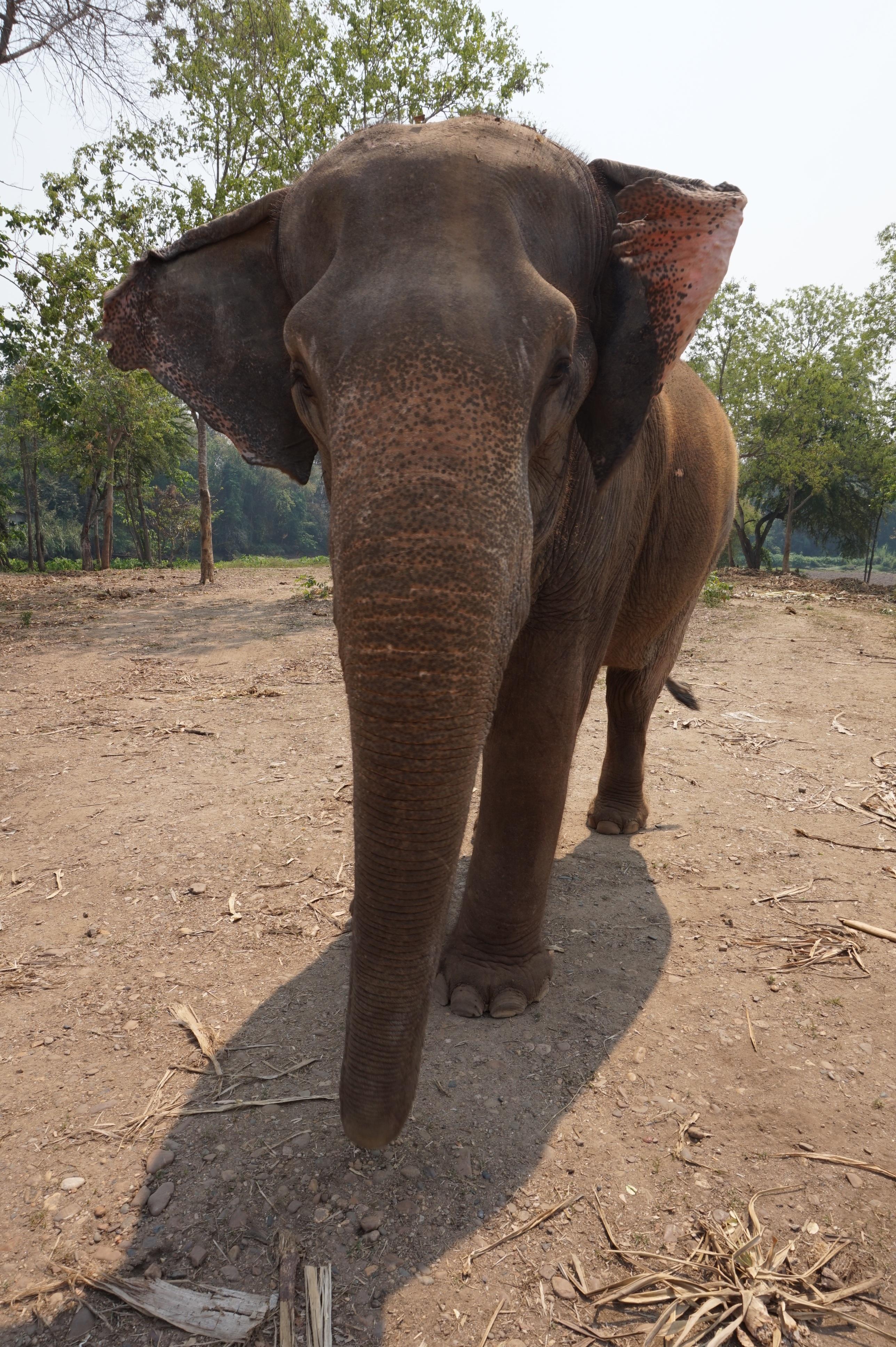 6600 Gambar Hewan Yang Ada Di Asia Tenggara Gratis Terbaik