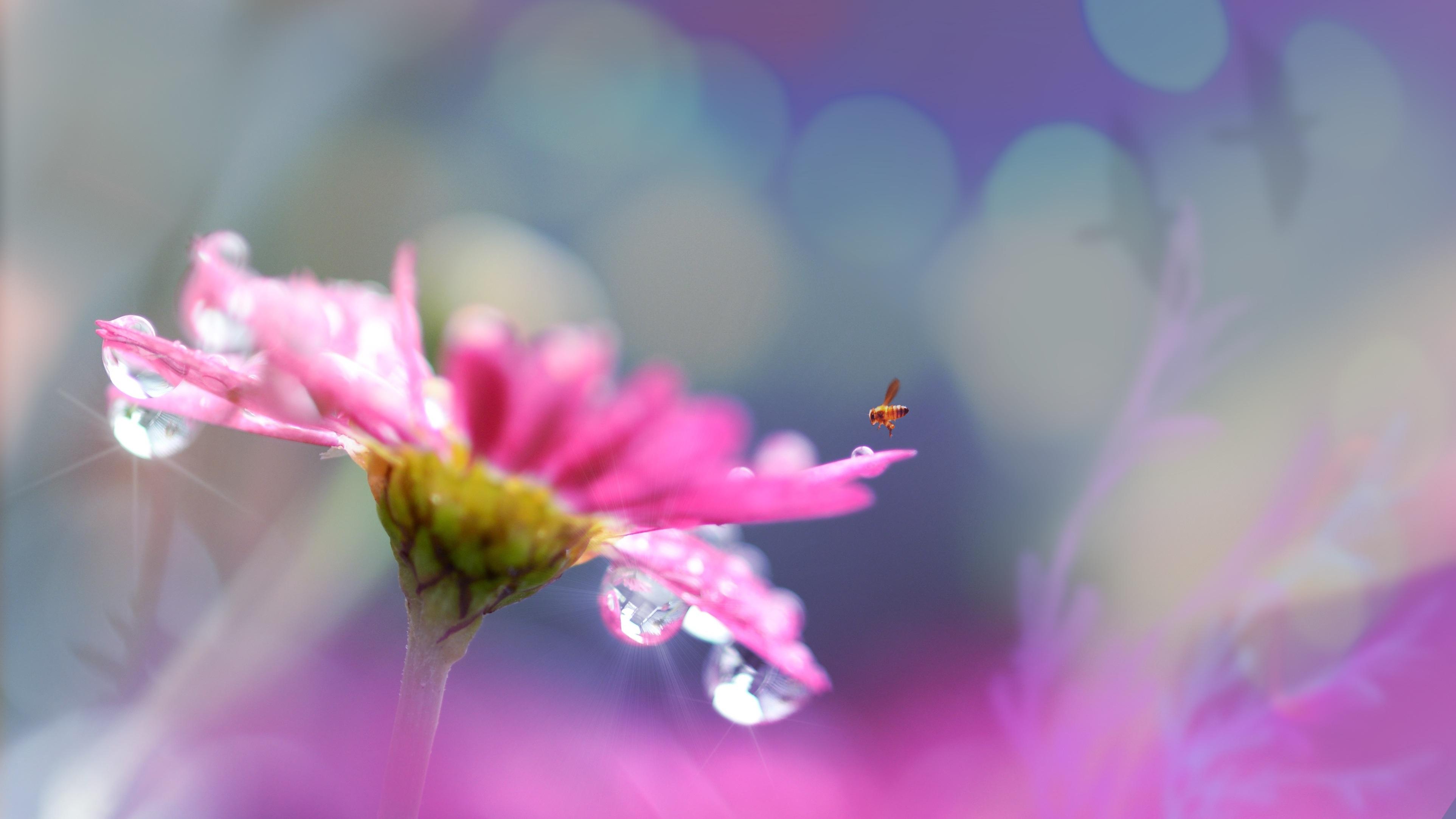 Free Images Landscape Nature Outdoor Blossom Droplet