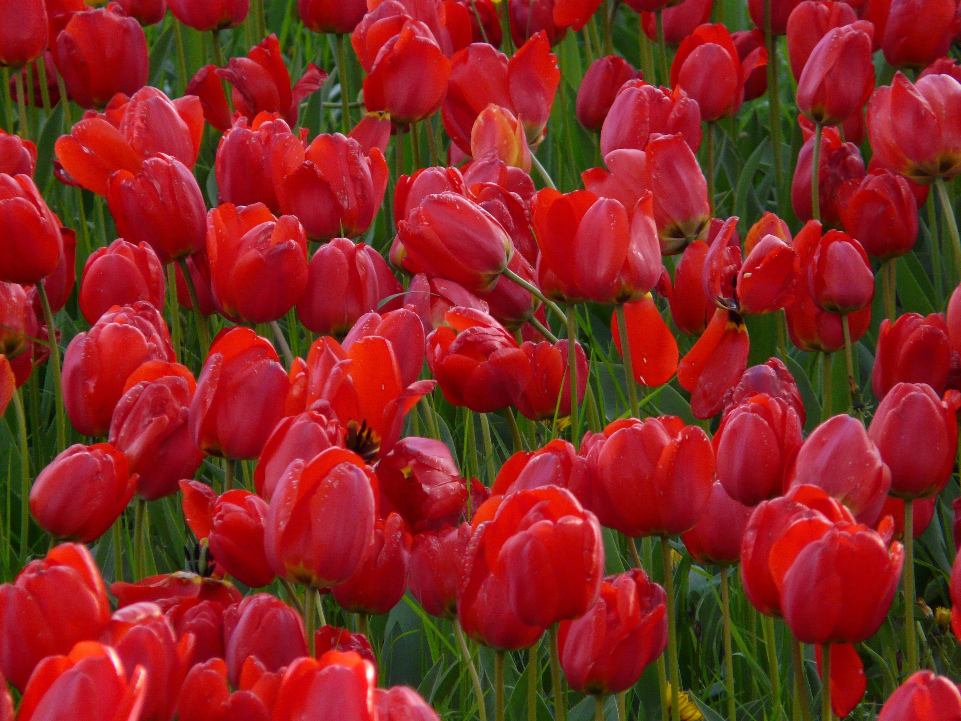 Free Images : landscape, nature, outdoor, blossom, sunlight, petal ...