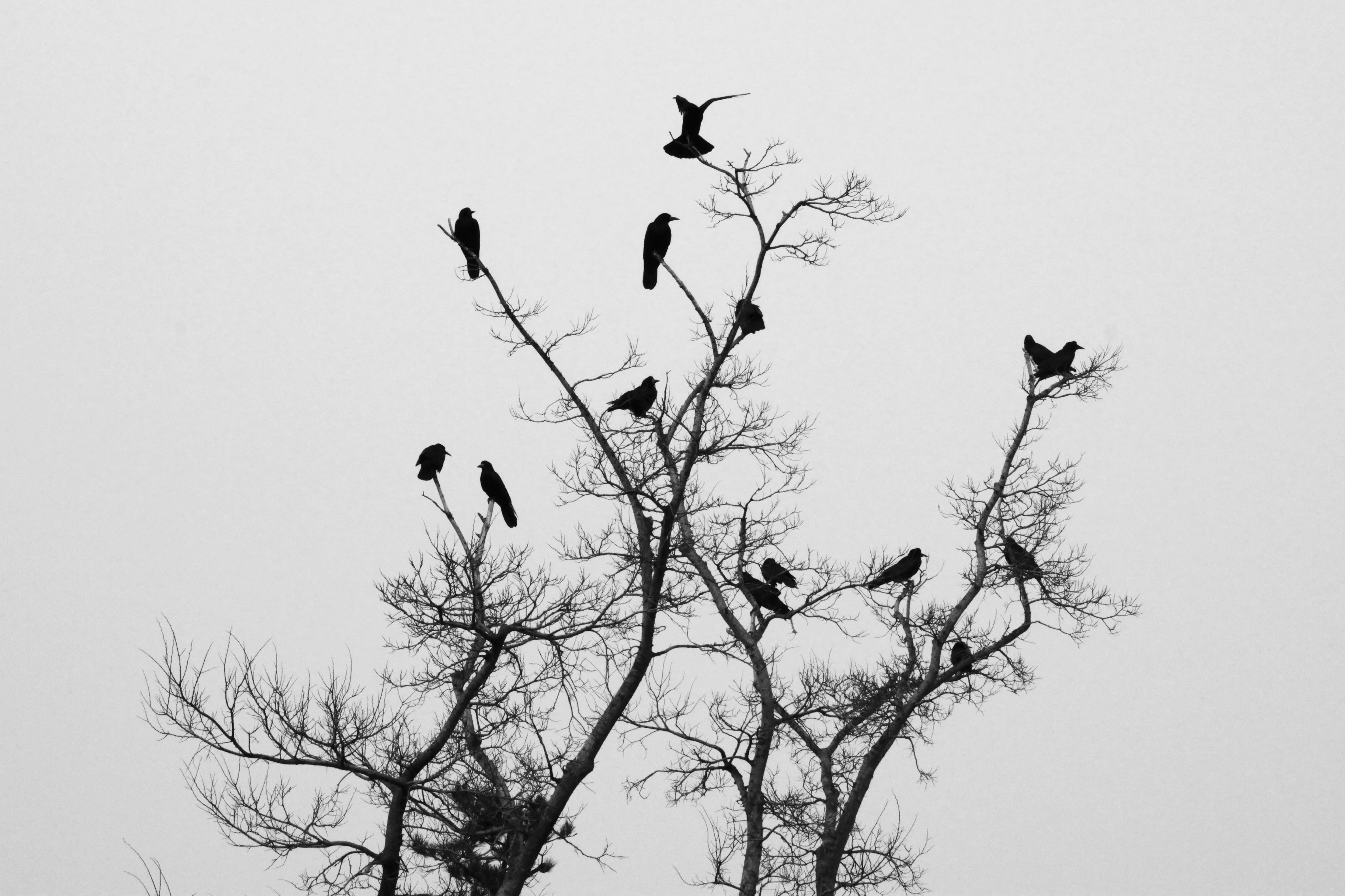 80+ Gambar Siluet Hewan Burung HD Terbaru