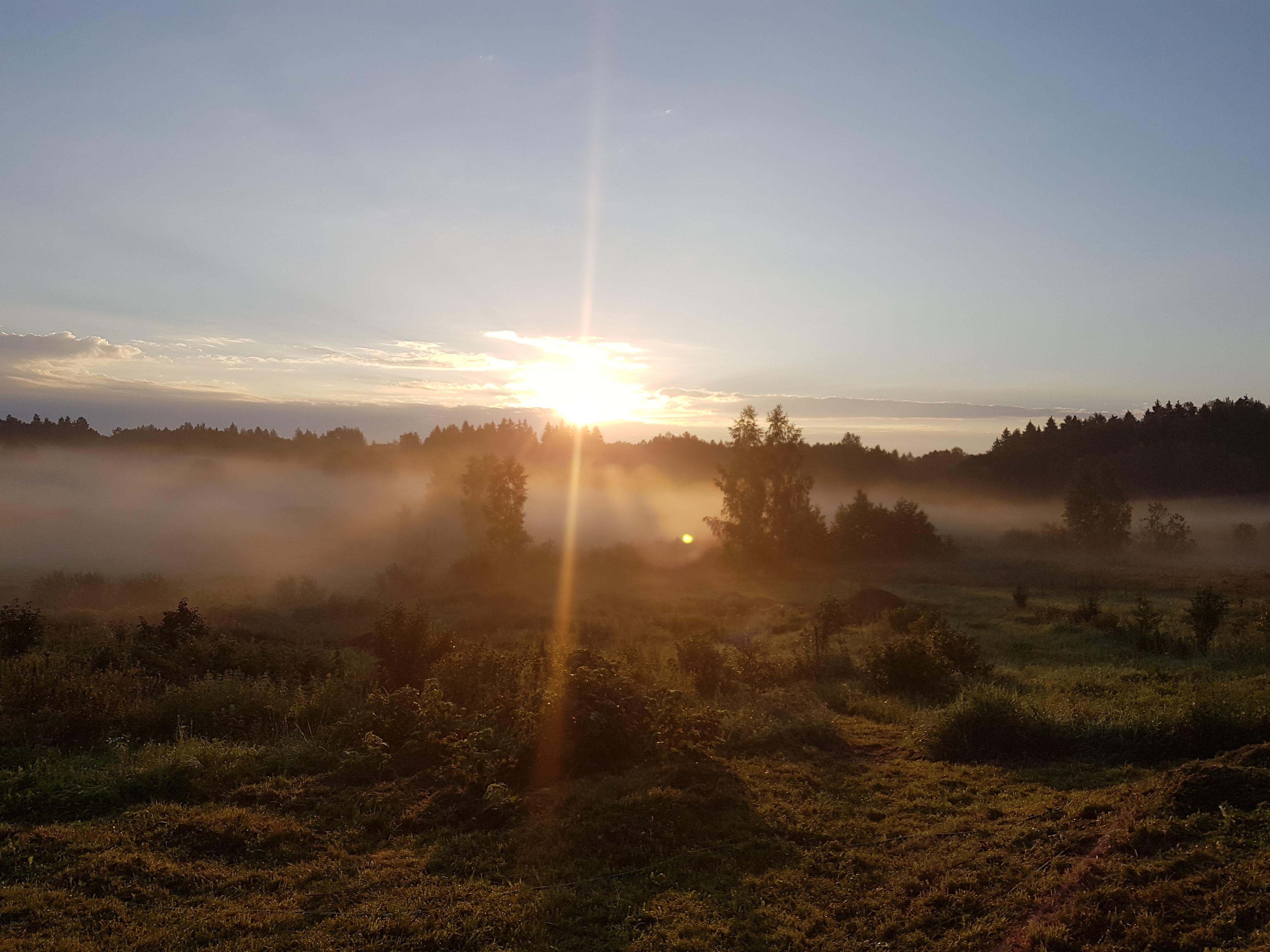 фото утреннего солнца более прочное