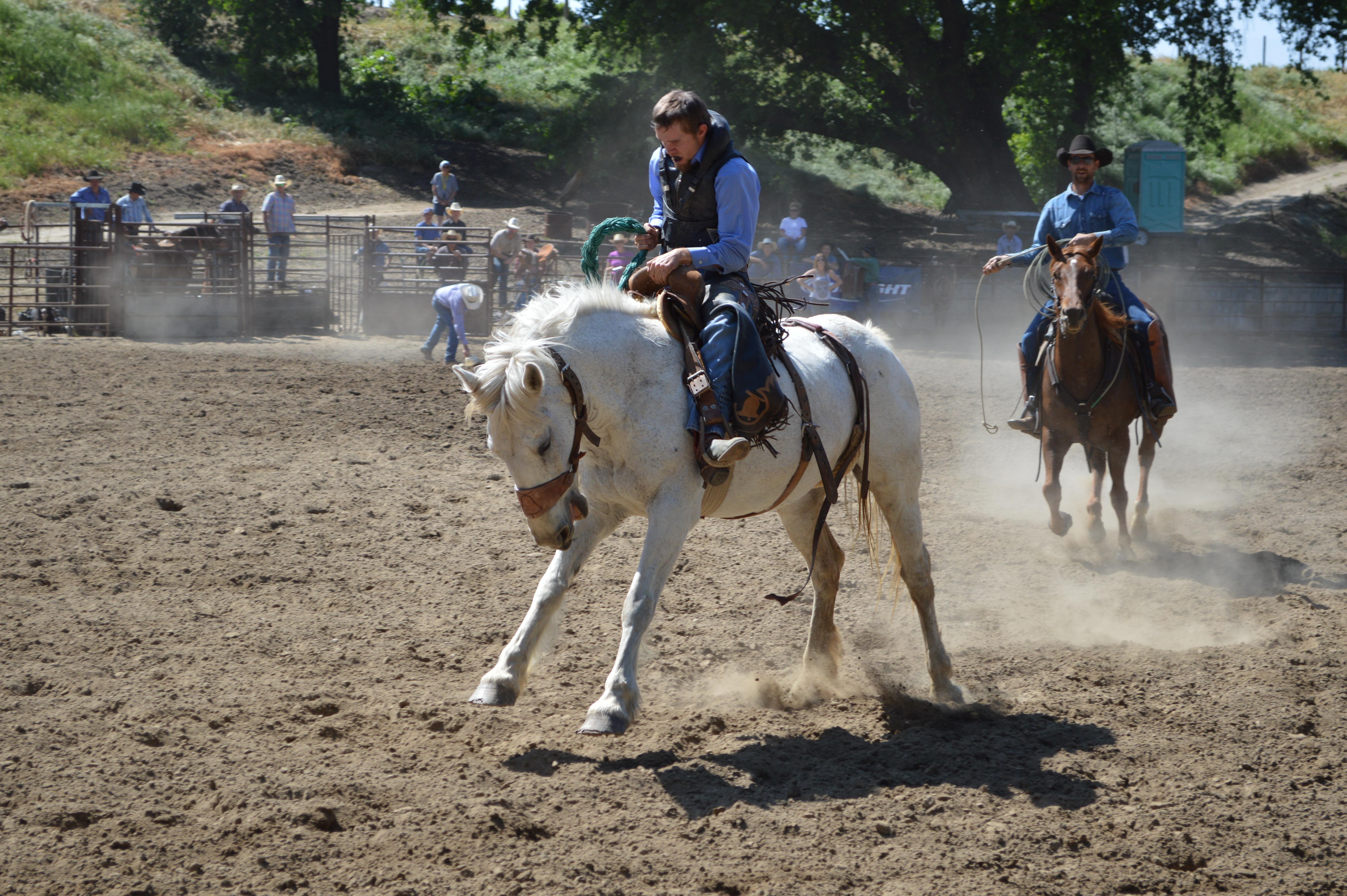 Обучение верховая езда бесплатно институты дистанционного обучения украины