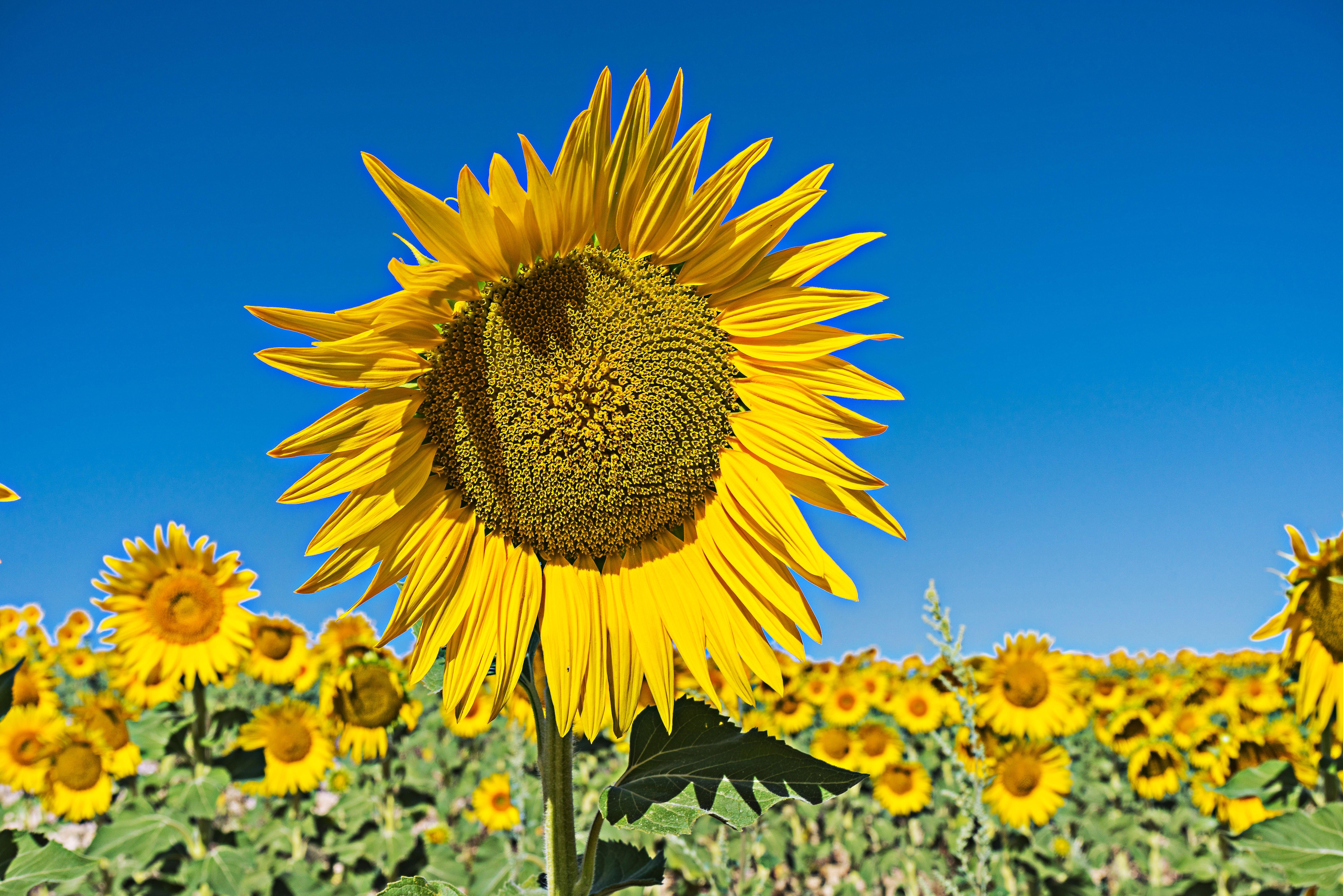 Free Images Landscape Prairie Produce Botany Flora Yellow