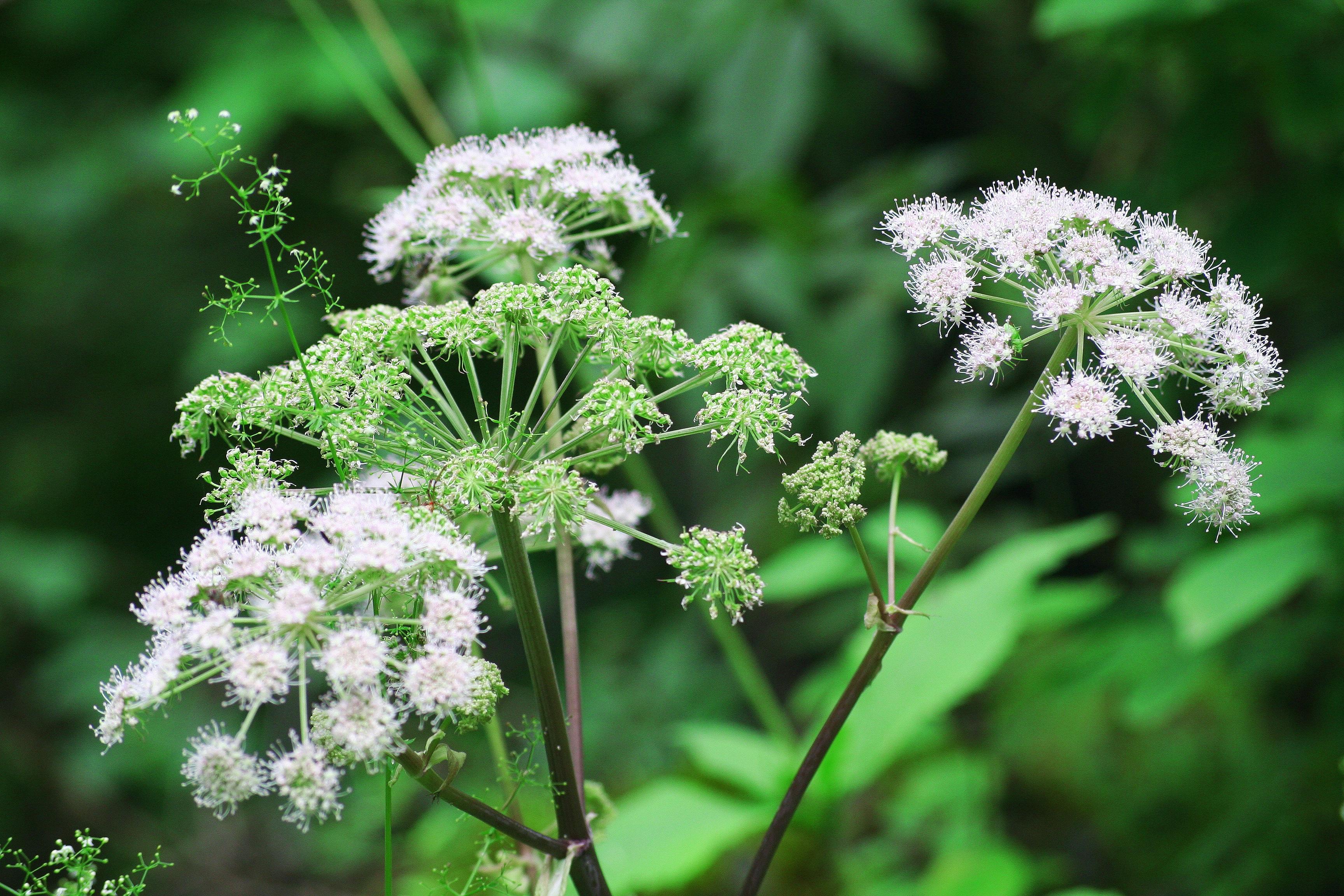 images gratuites paysage la nature fleur herbe produire botanique flore les plantes. Black Bedroom Furniture Sets. Home Design Ideas