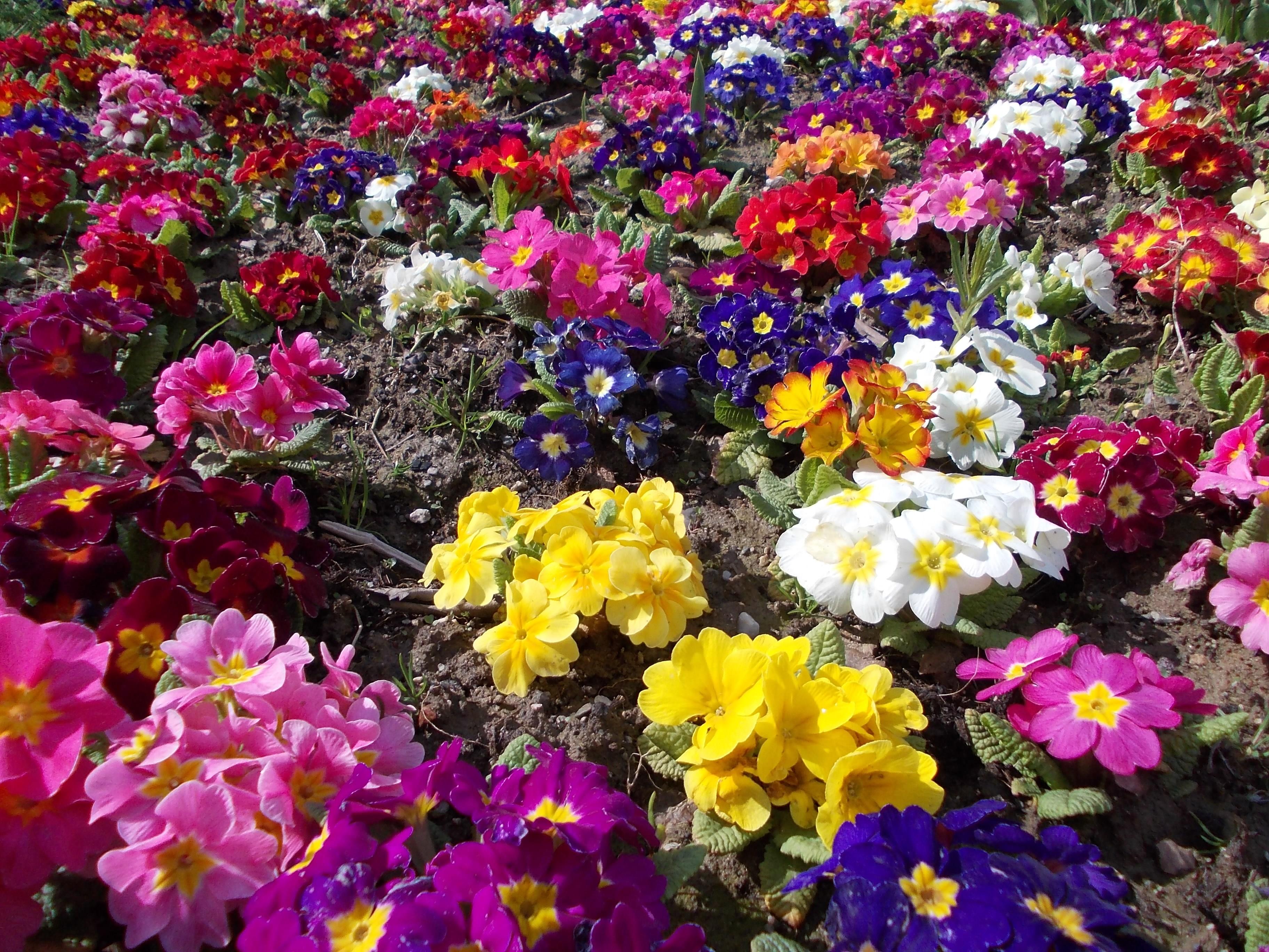 Poze Peisaj Natură Floare Arc Macro Colorat Floră