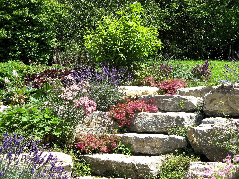 Fotos gratis paisaje naturaleza planta c sped flor for Paisajismo jardines fotos