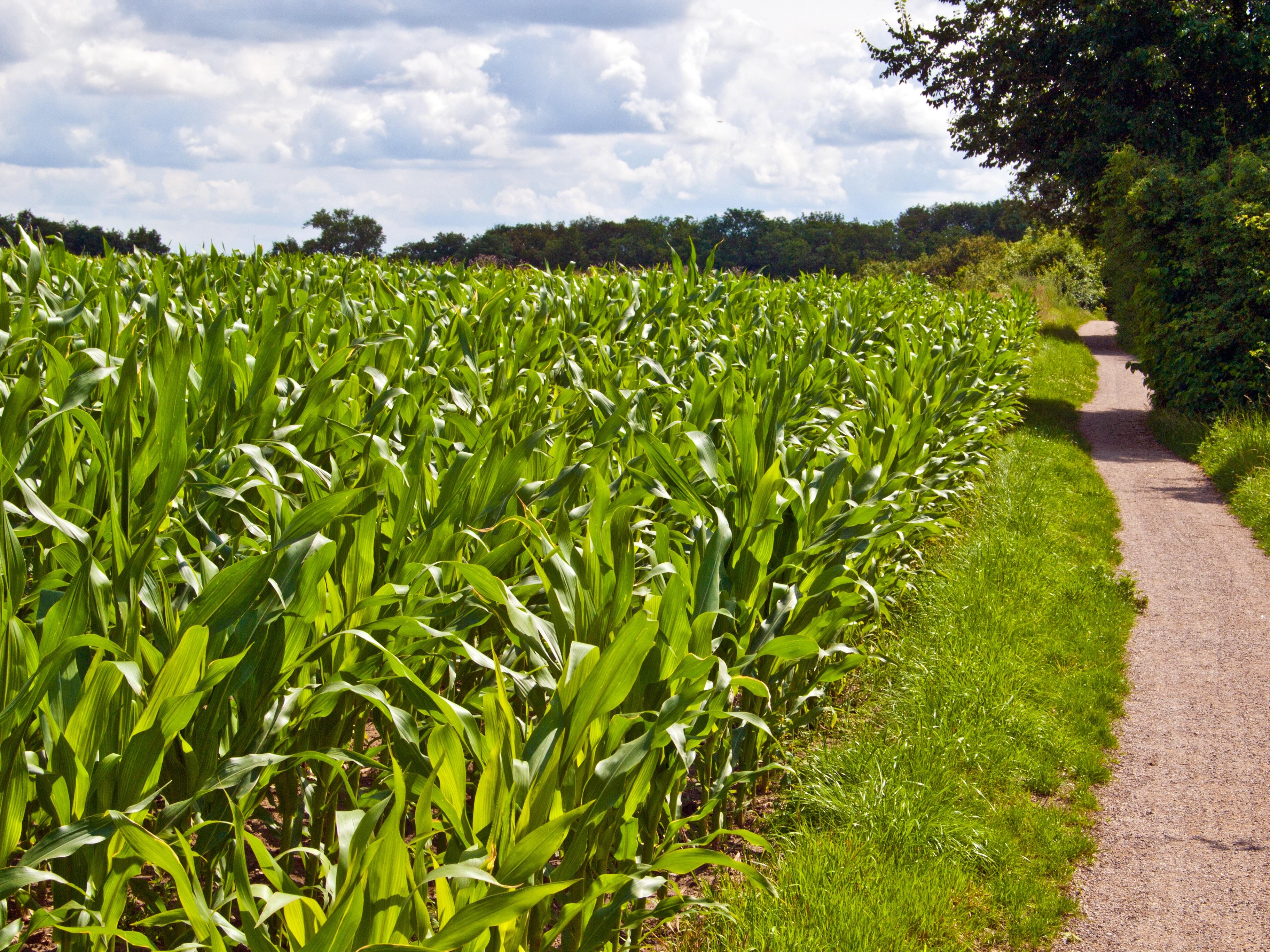 Gambar Pemandangan Alam Menanam Langit Bidang Tanah Pertanian