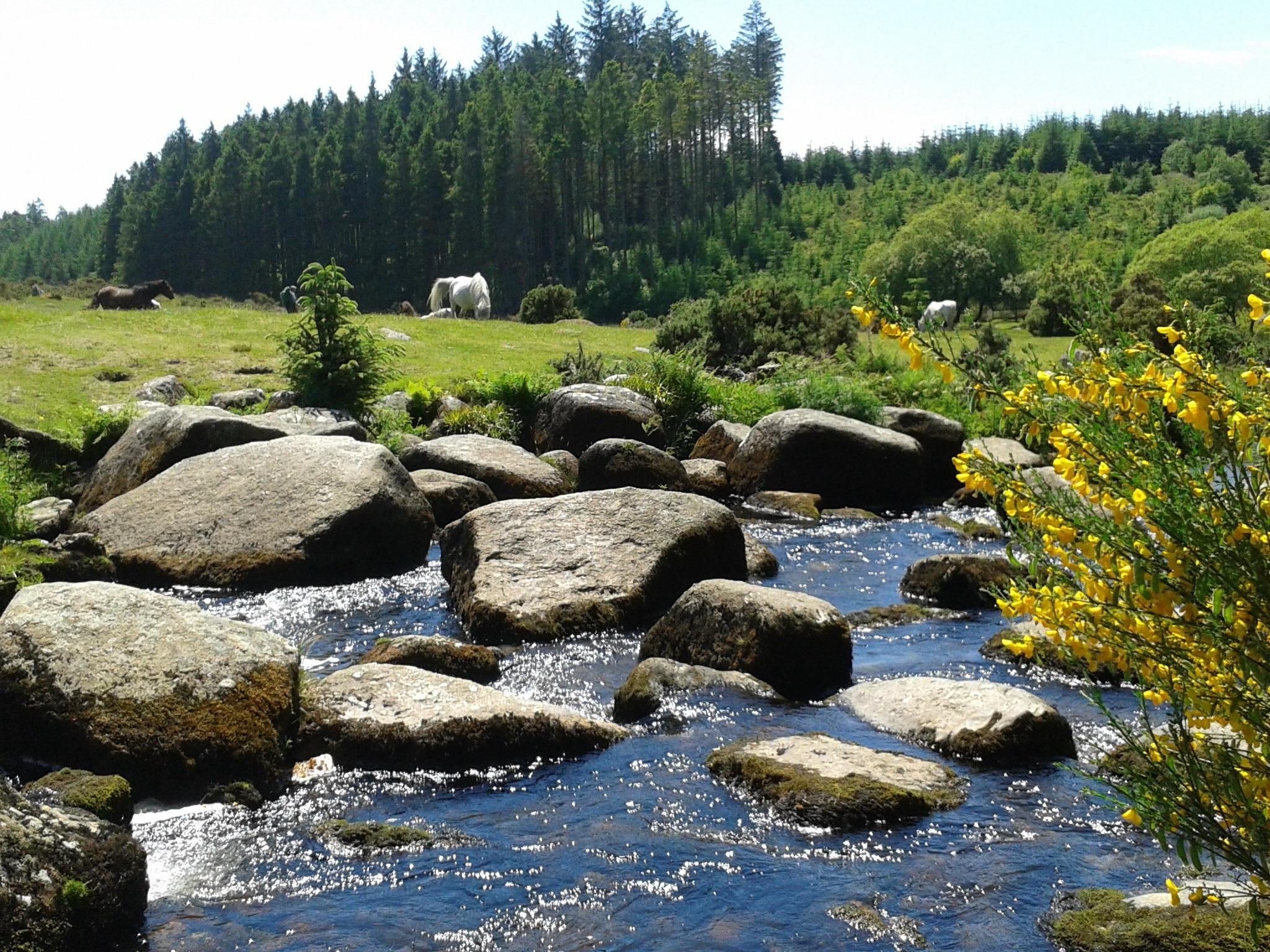 Gambar Pemandangan Alam Batu Gurun Bunga Kolam Aliran Cepat
