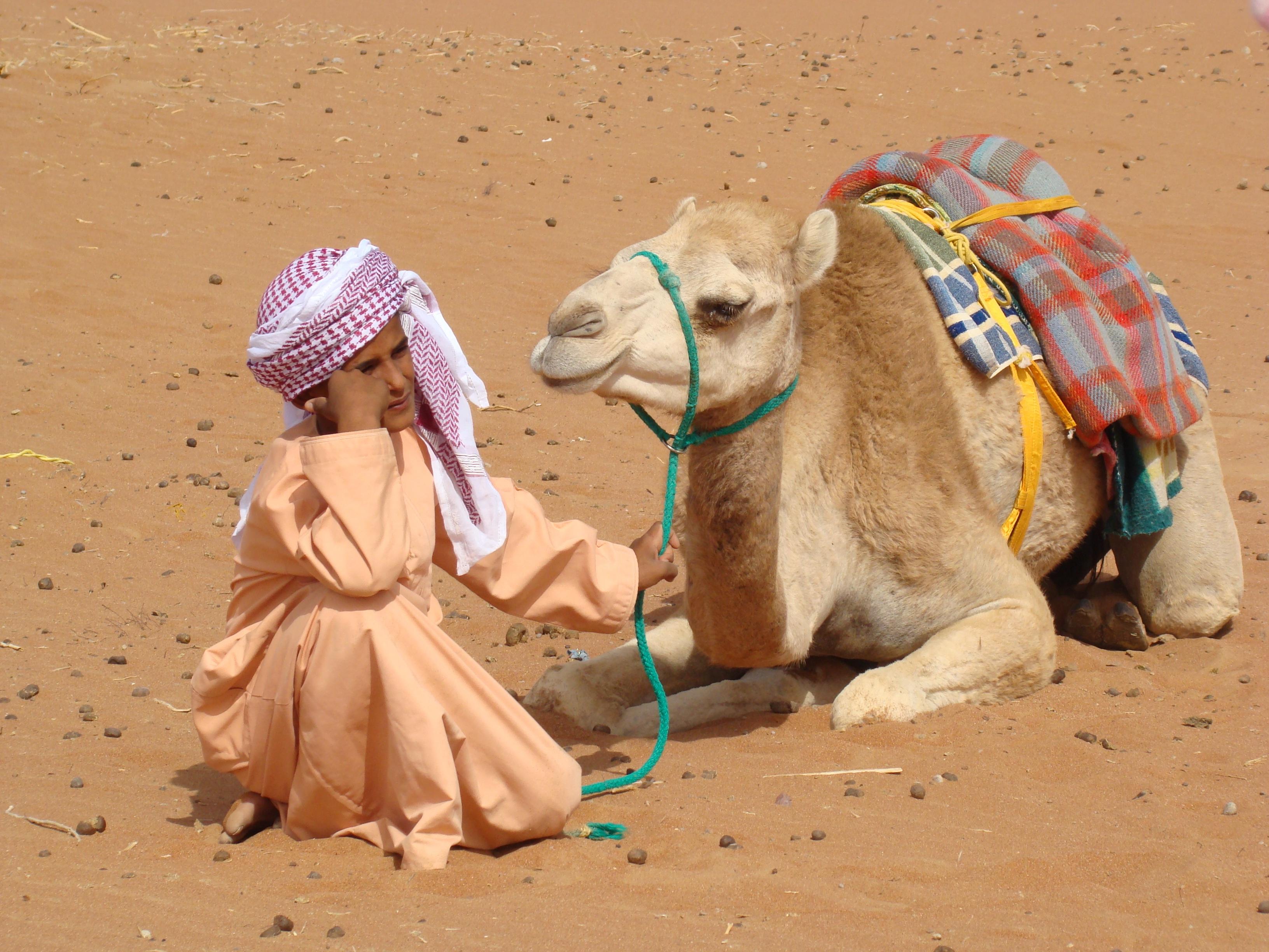 Стихи верблюды костюмов не носят