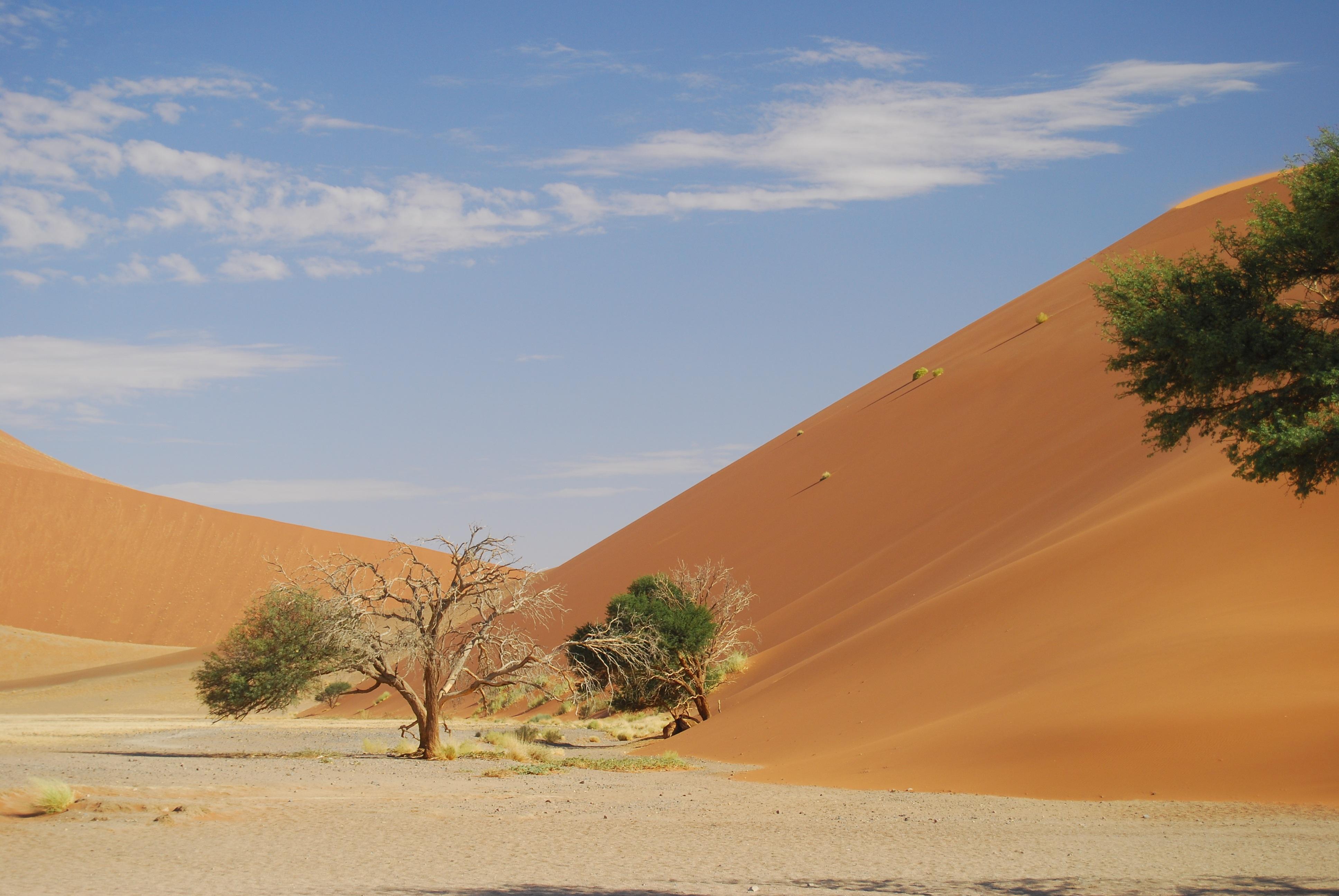 заботится песочные картинки африка бровь, затем