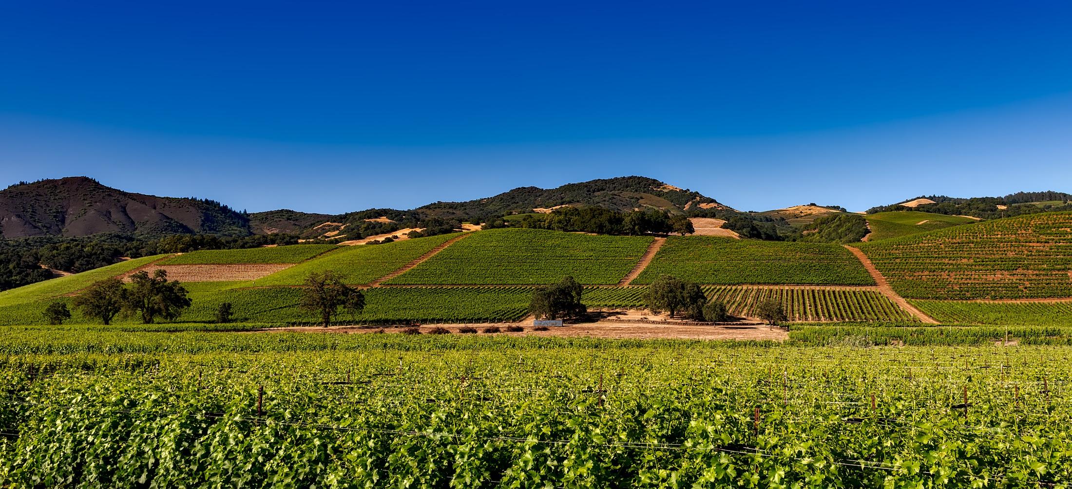 Champ De Vigne images gratuites : paysage, la nature, ciel, vigne, vignoble, du vin