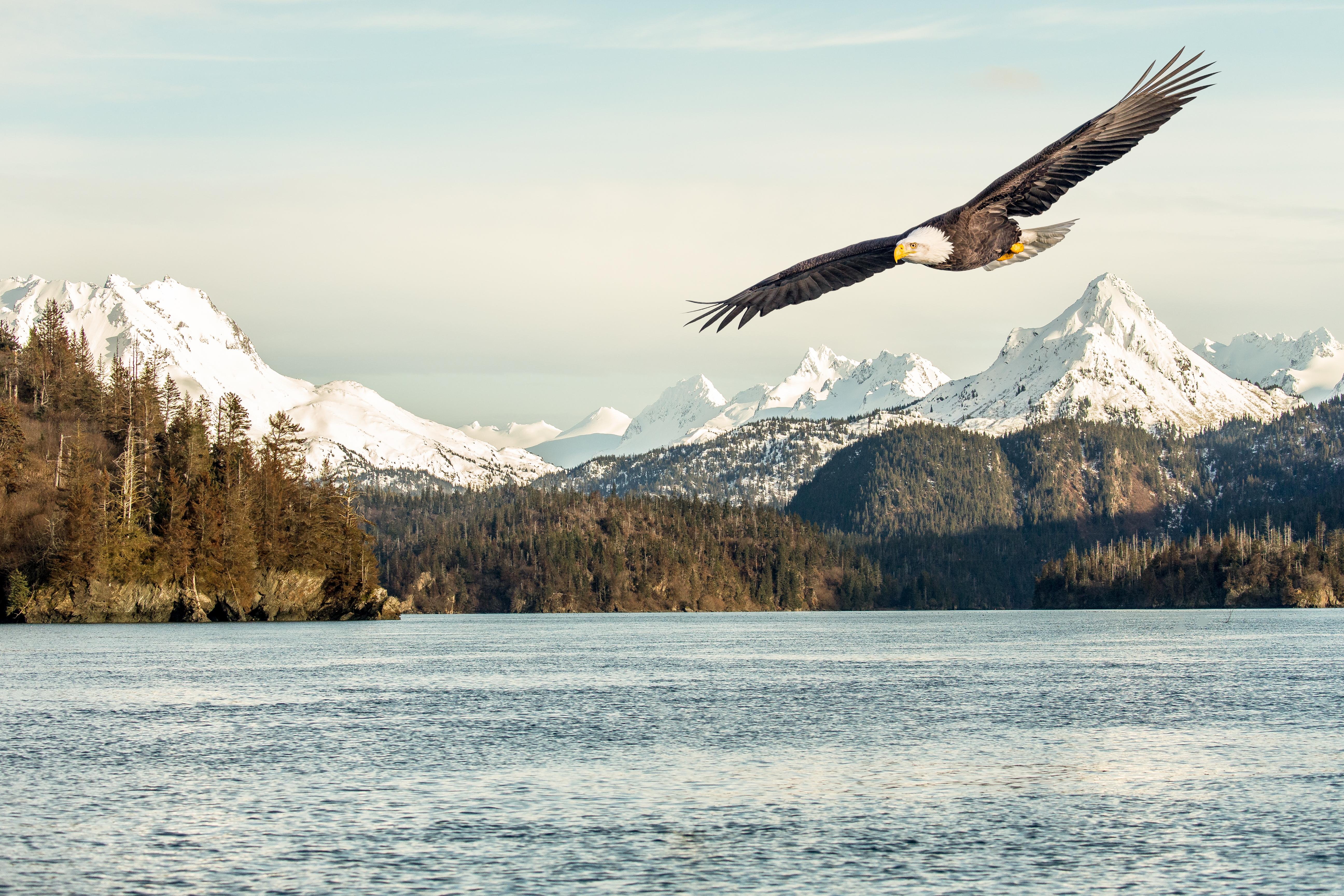 пейзажные фото птицы в полете что