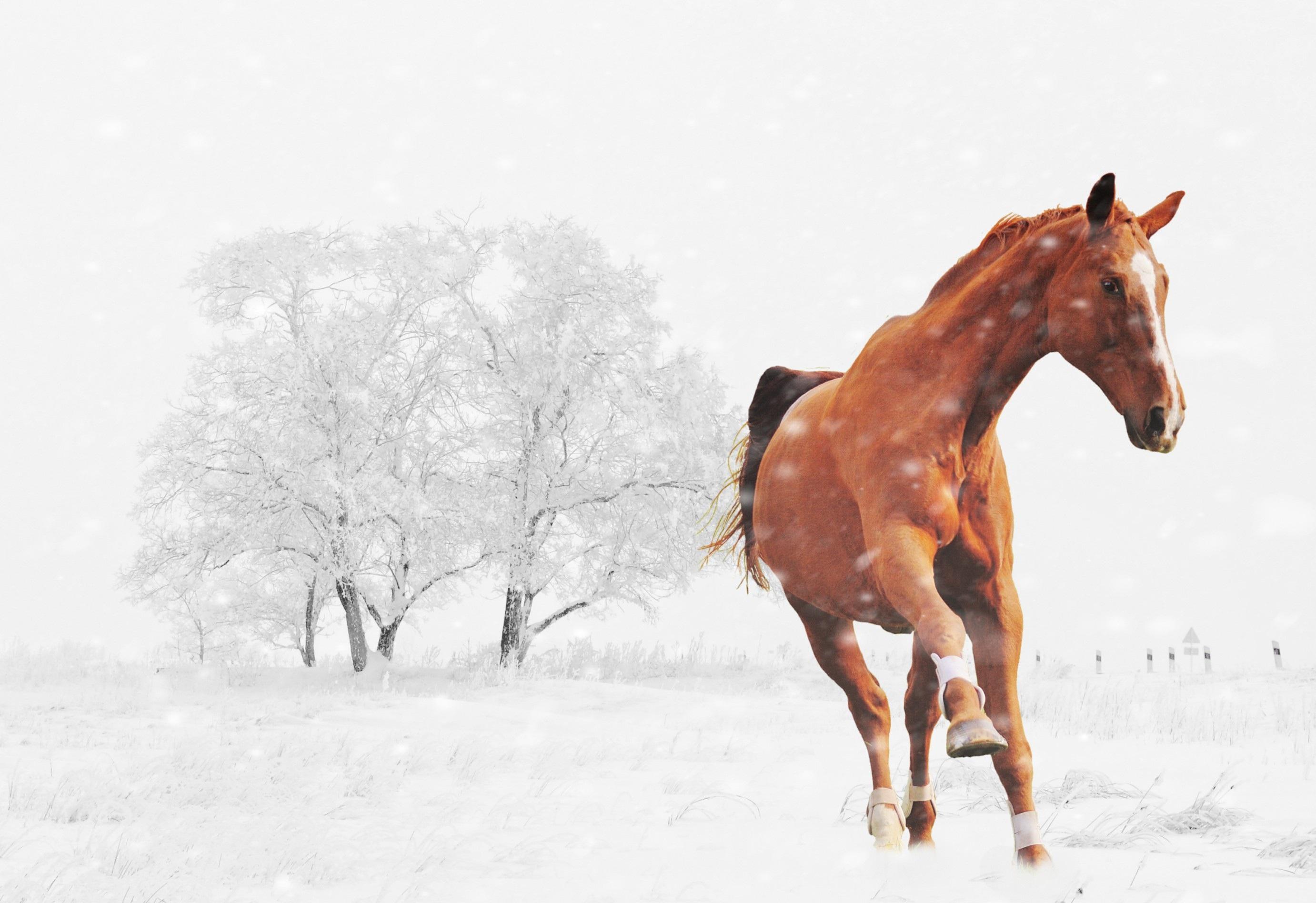 93+ Gambar Hewan Kuda Gratis
