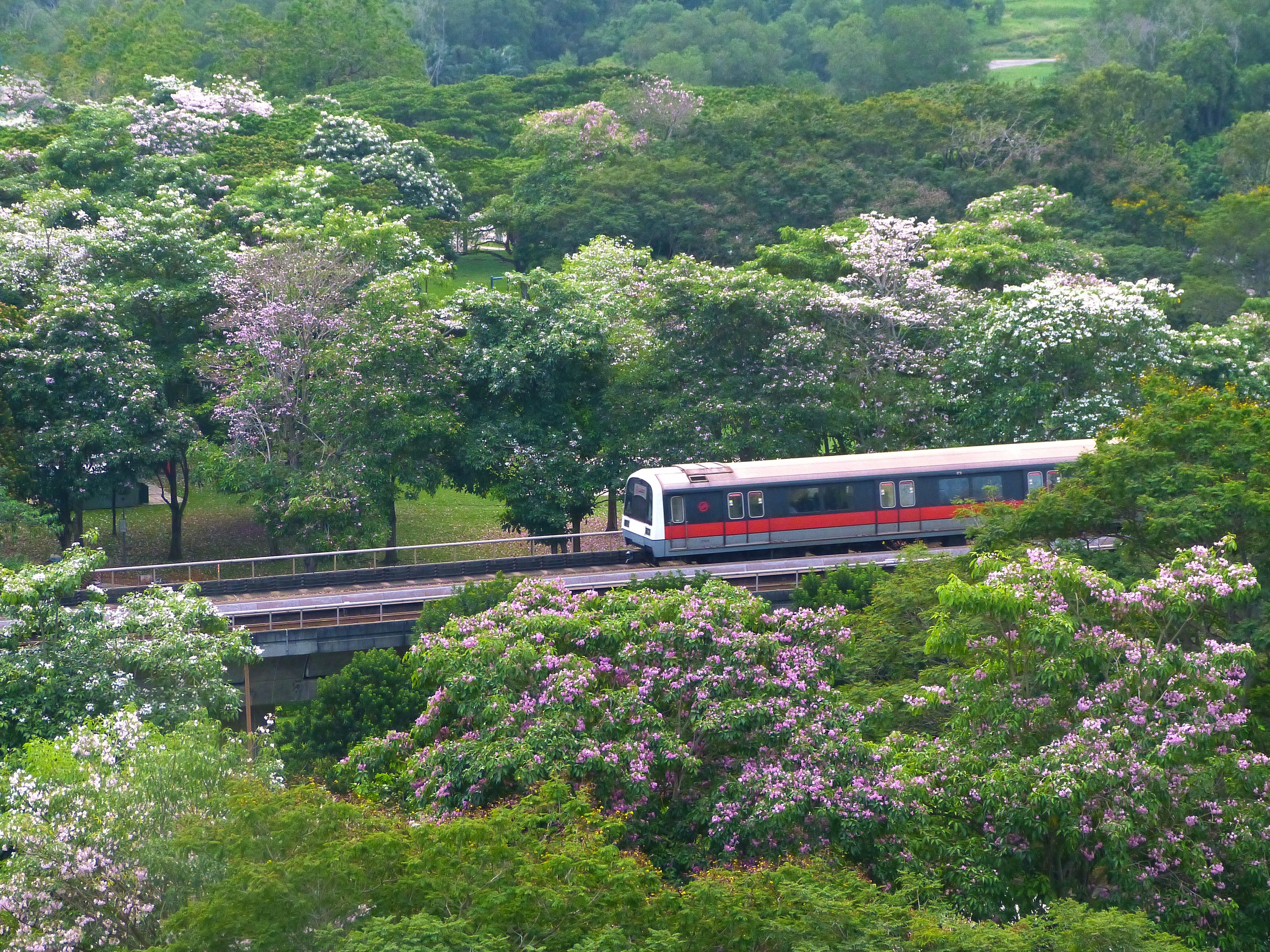landscape nature track flower train river transport green vehicle park blooming garden pink public transport flowers