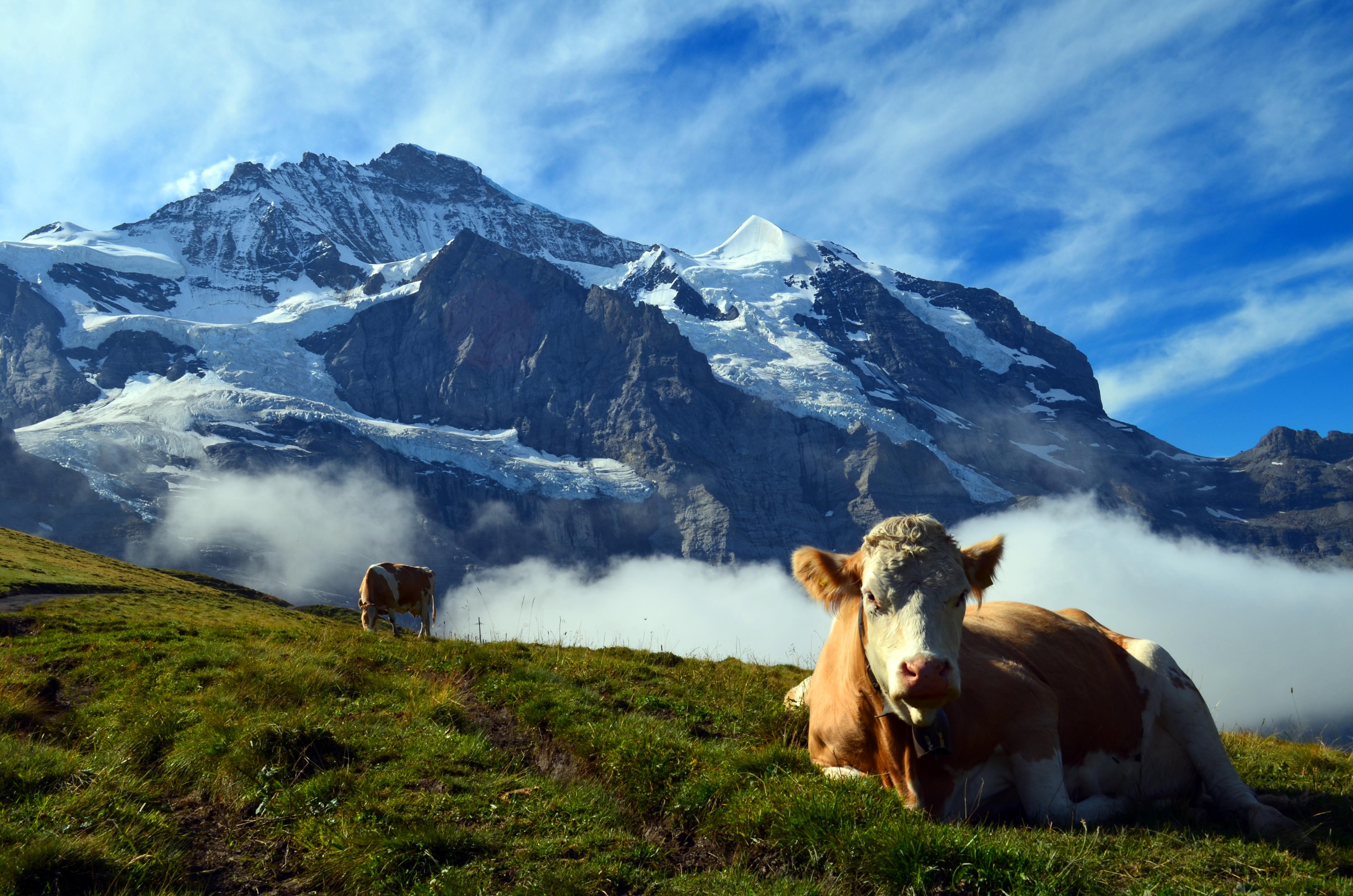 free images  landscape nature wilderness cloud meadow
