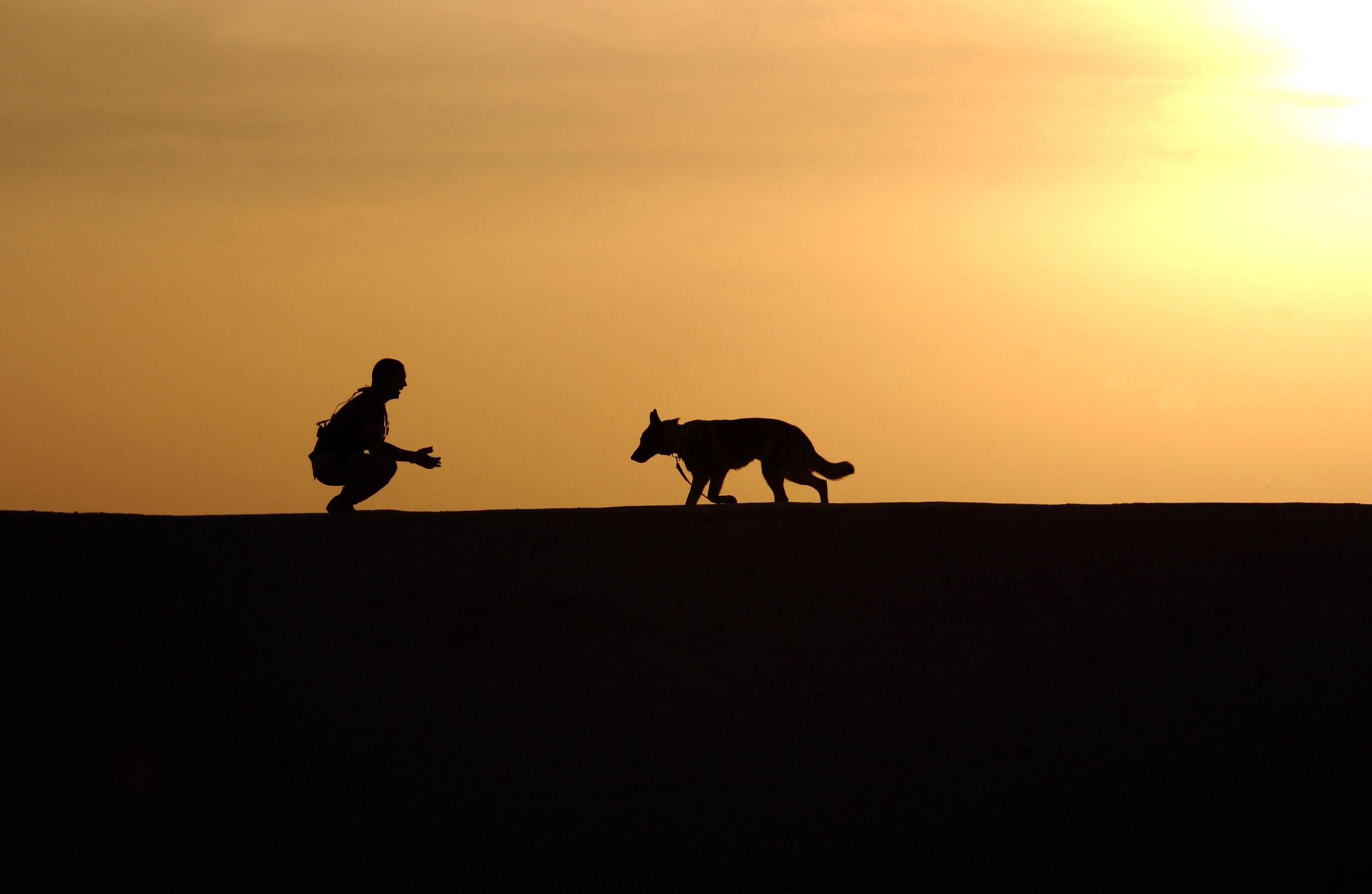 картинки с овчаркой на закате
