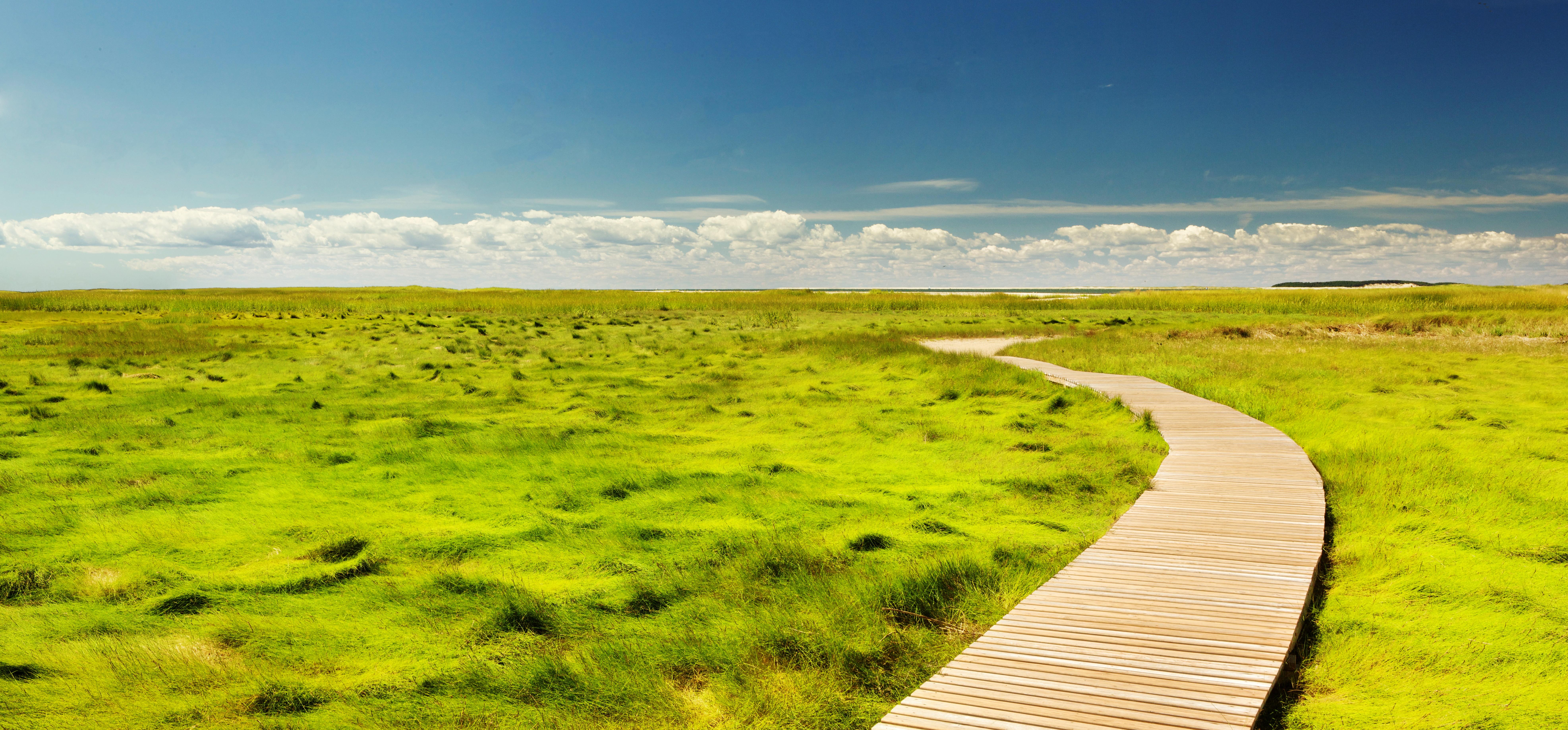 Free Images : landscape, path, pathway, horizon, marsh ...
